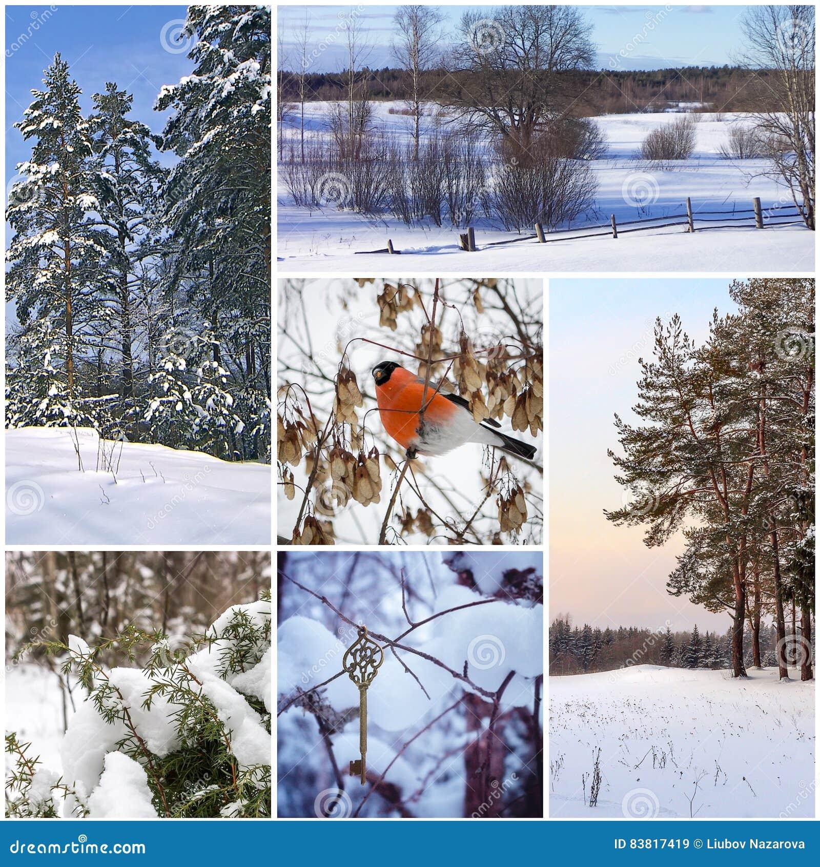 Colagem bonita do inverno