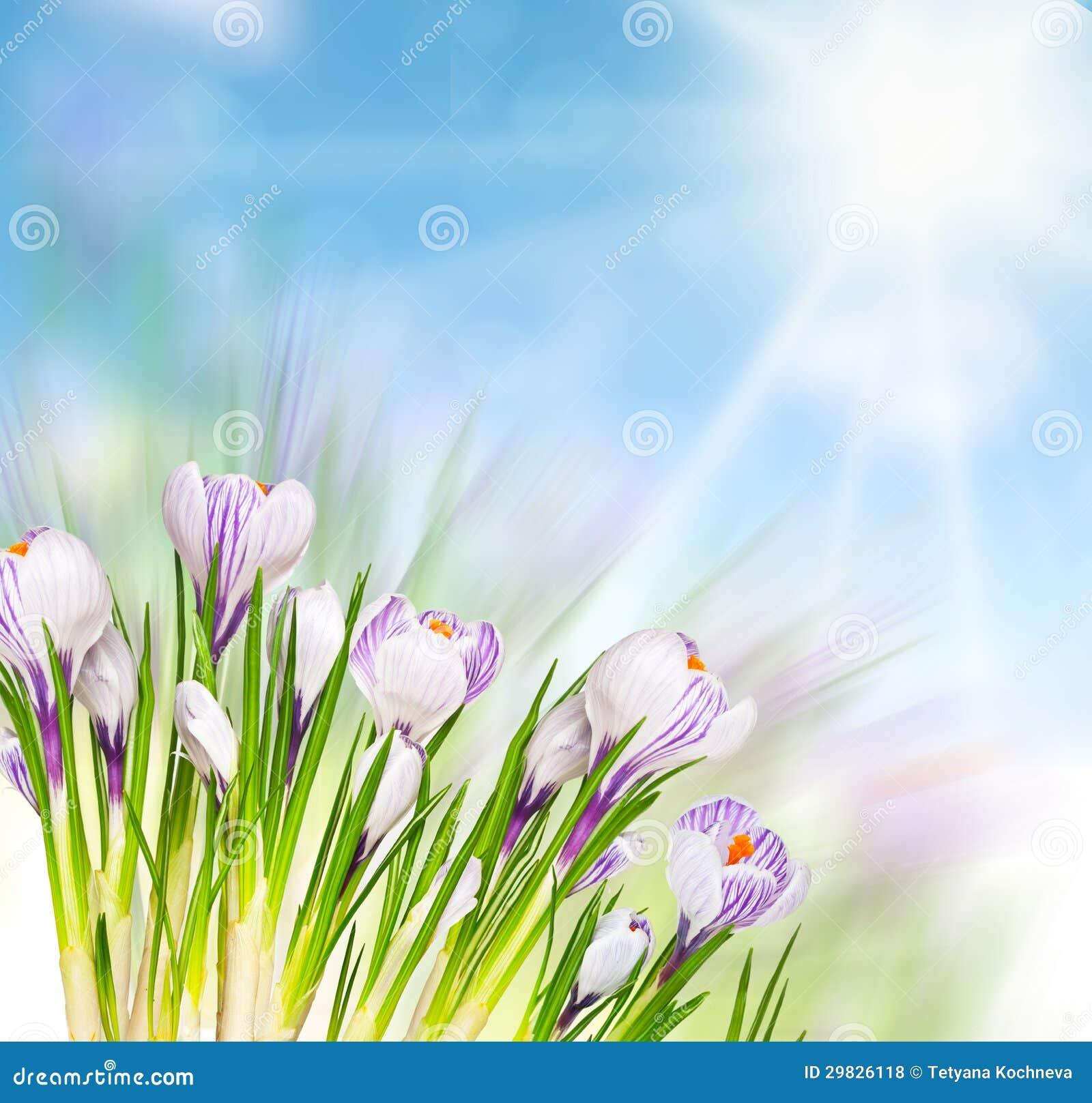 Flores bonitas da mola