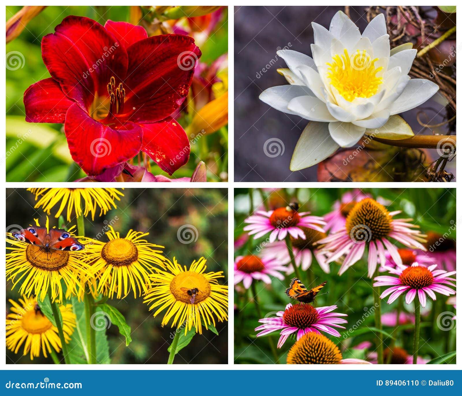 Colagem de fotos das flores na natureza