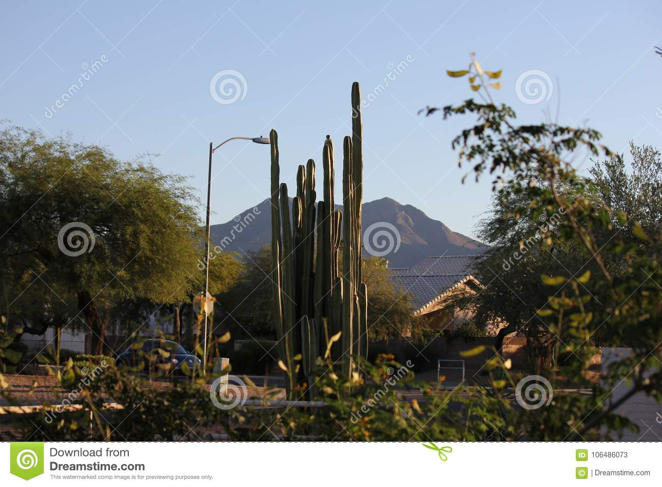 High-desert mountains in the north to subtropical desert lowlands in the south, Arizona presents a variety of discrete desert.