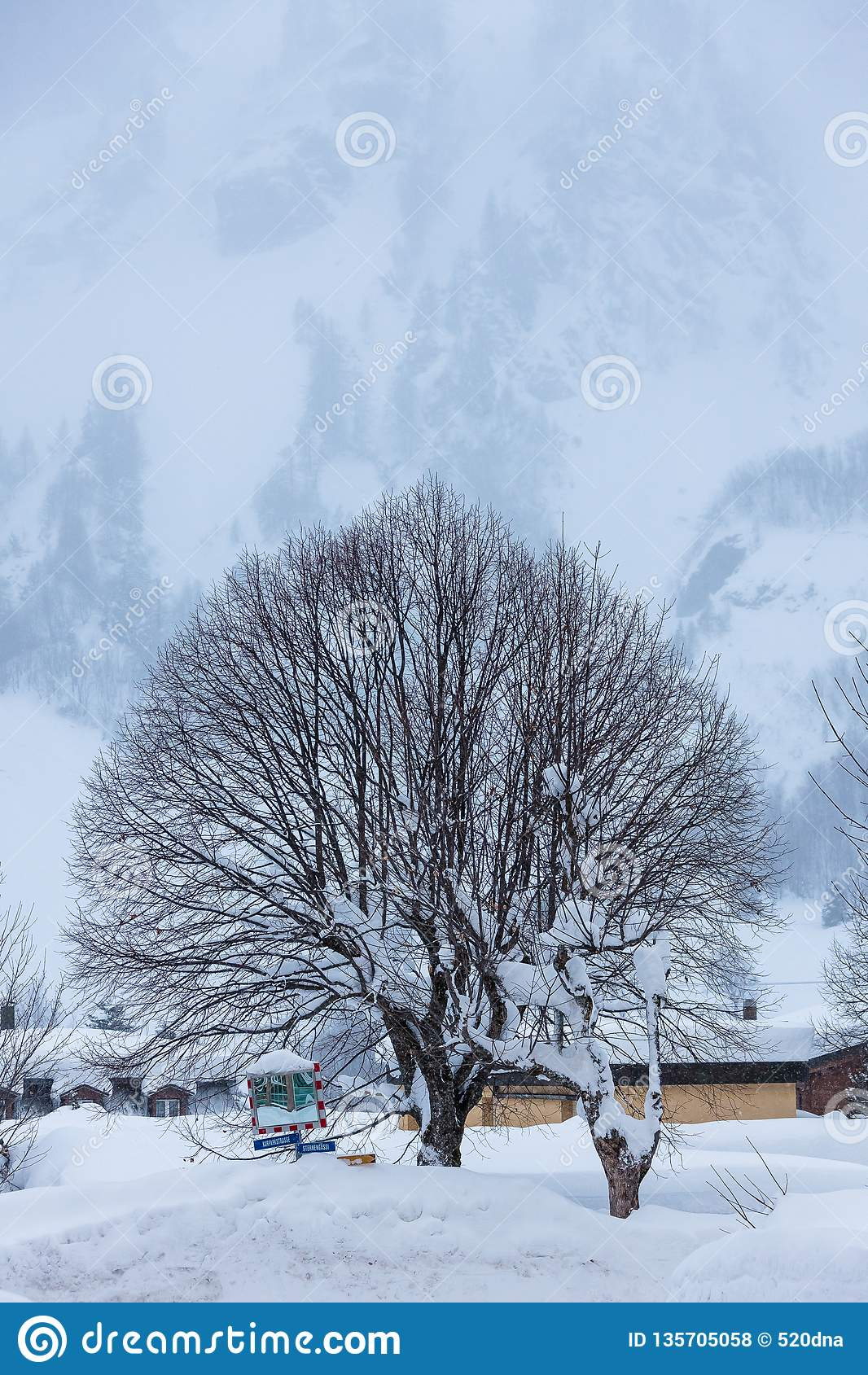 The Cold Switzerland`s Forest Winter Tree