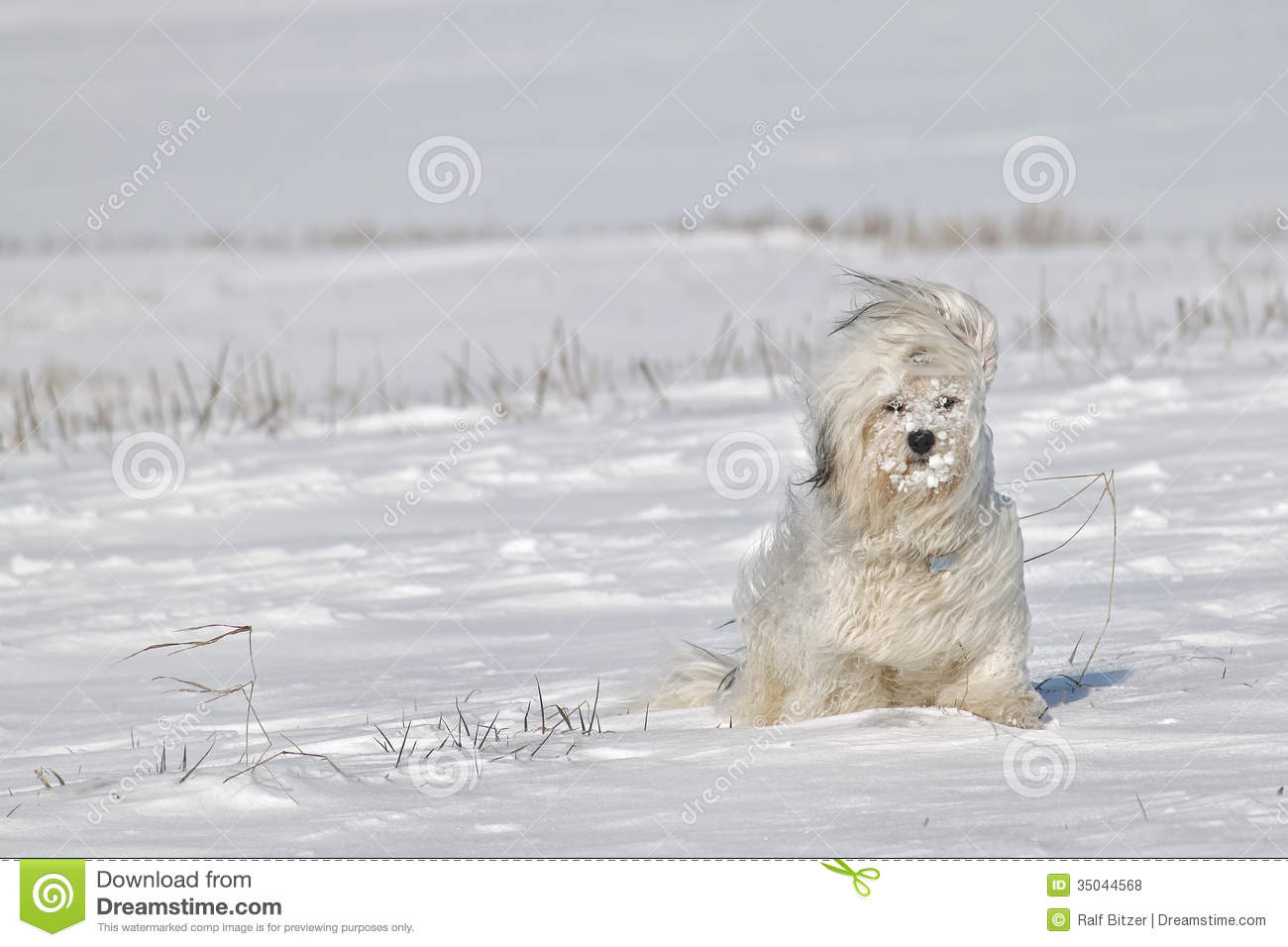 Outdoor Dog House Plans Cold winds stock photo...