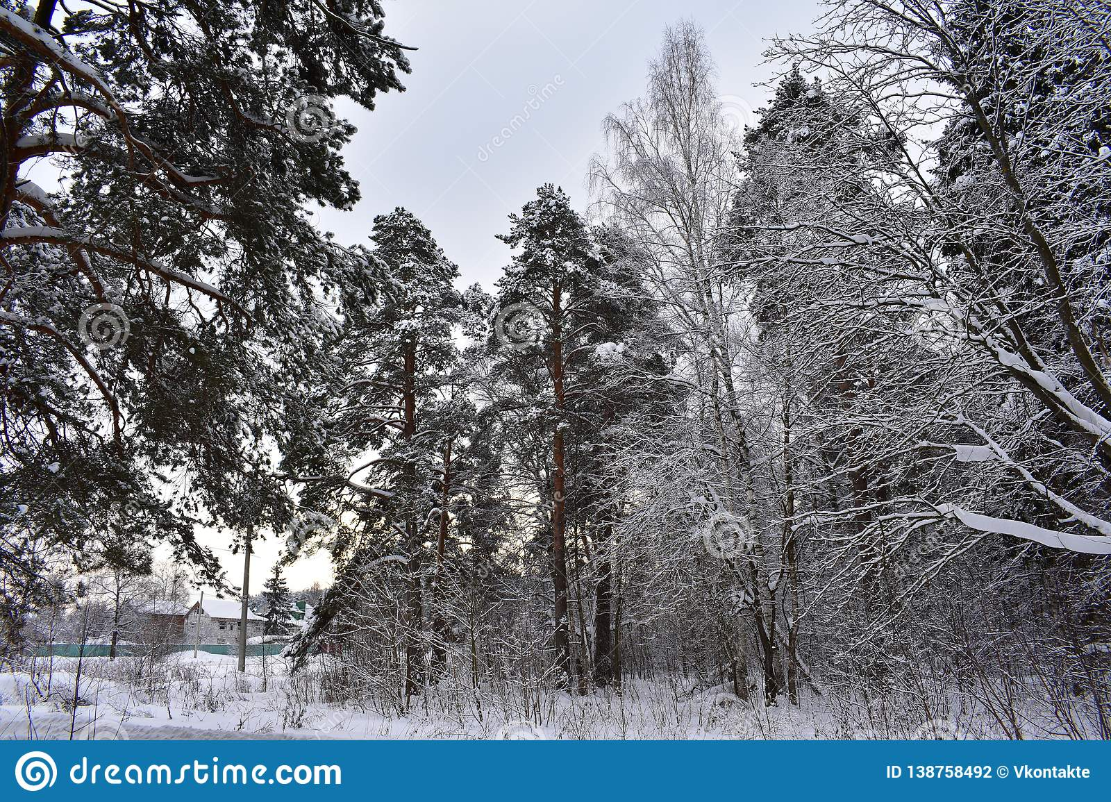 Cold winter on the outskirts of the city begins winter forest
