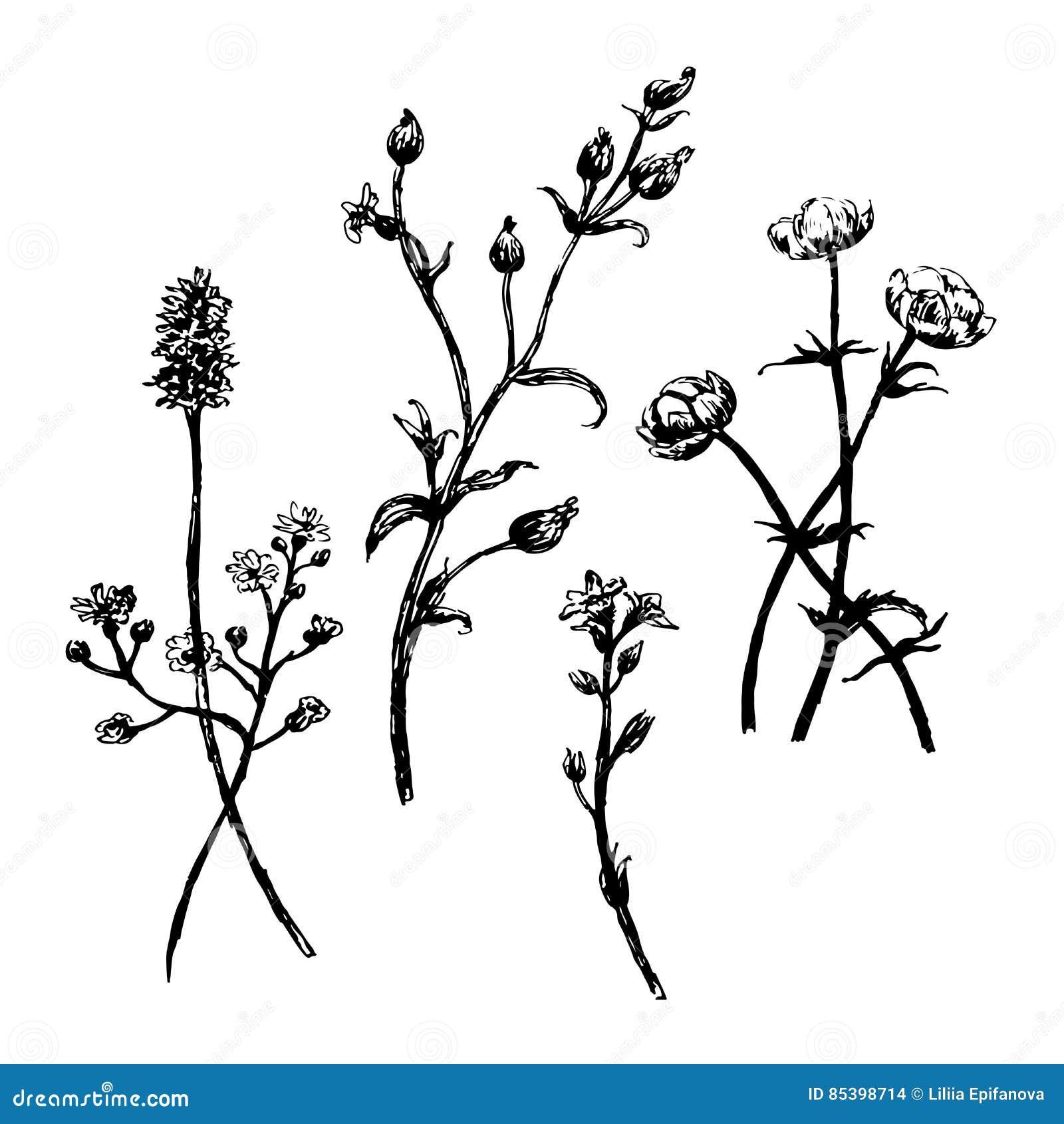A coleção ajustada de tiragem de flores selvagens esboça a ilustração tirada mão