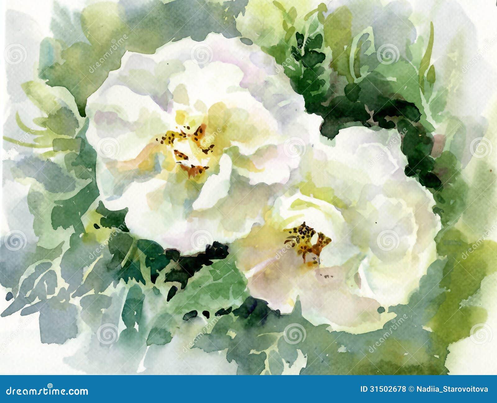Coleção da flor da aquarela: Rosas