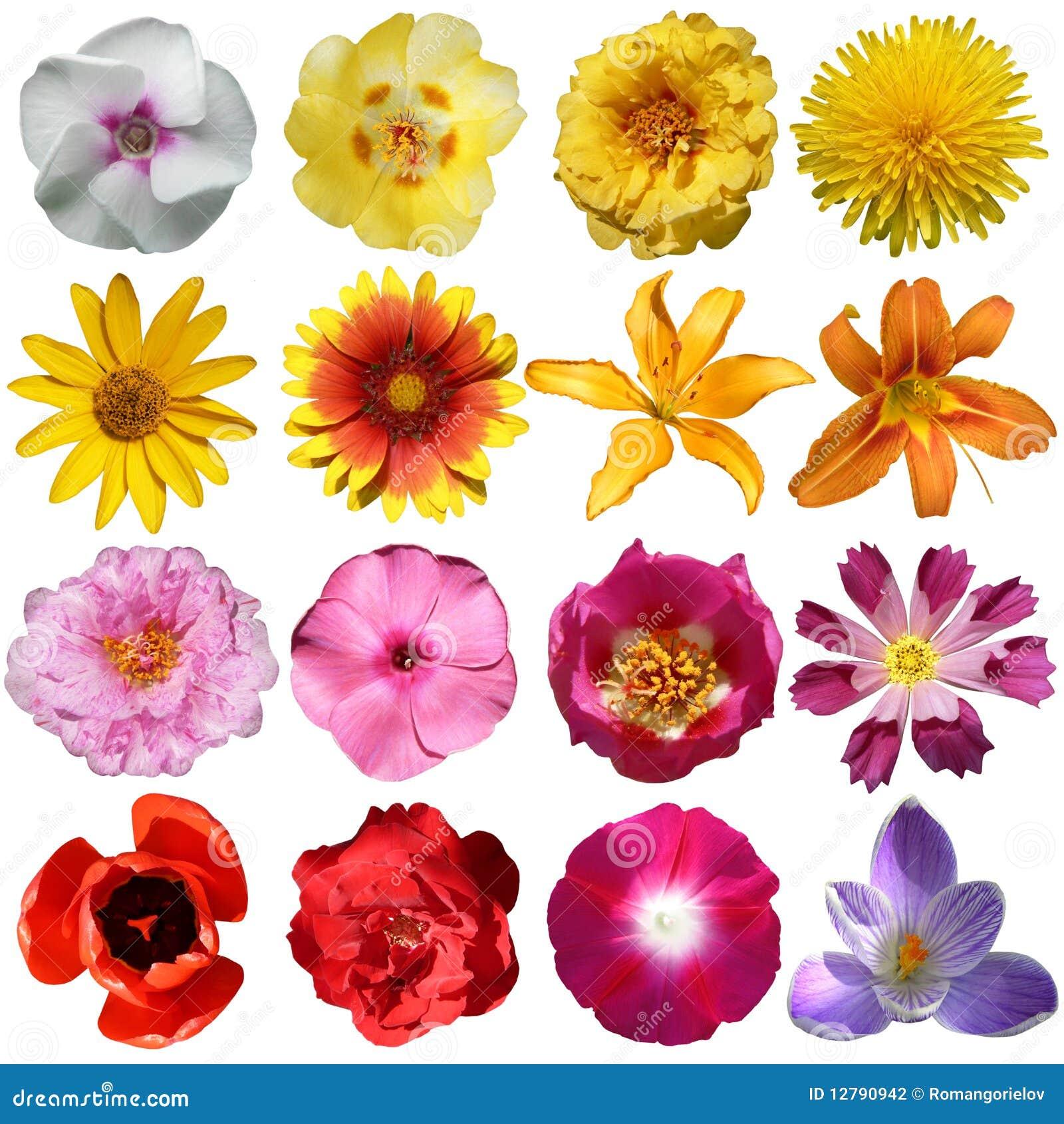 Coleção das flores