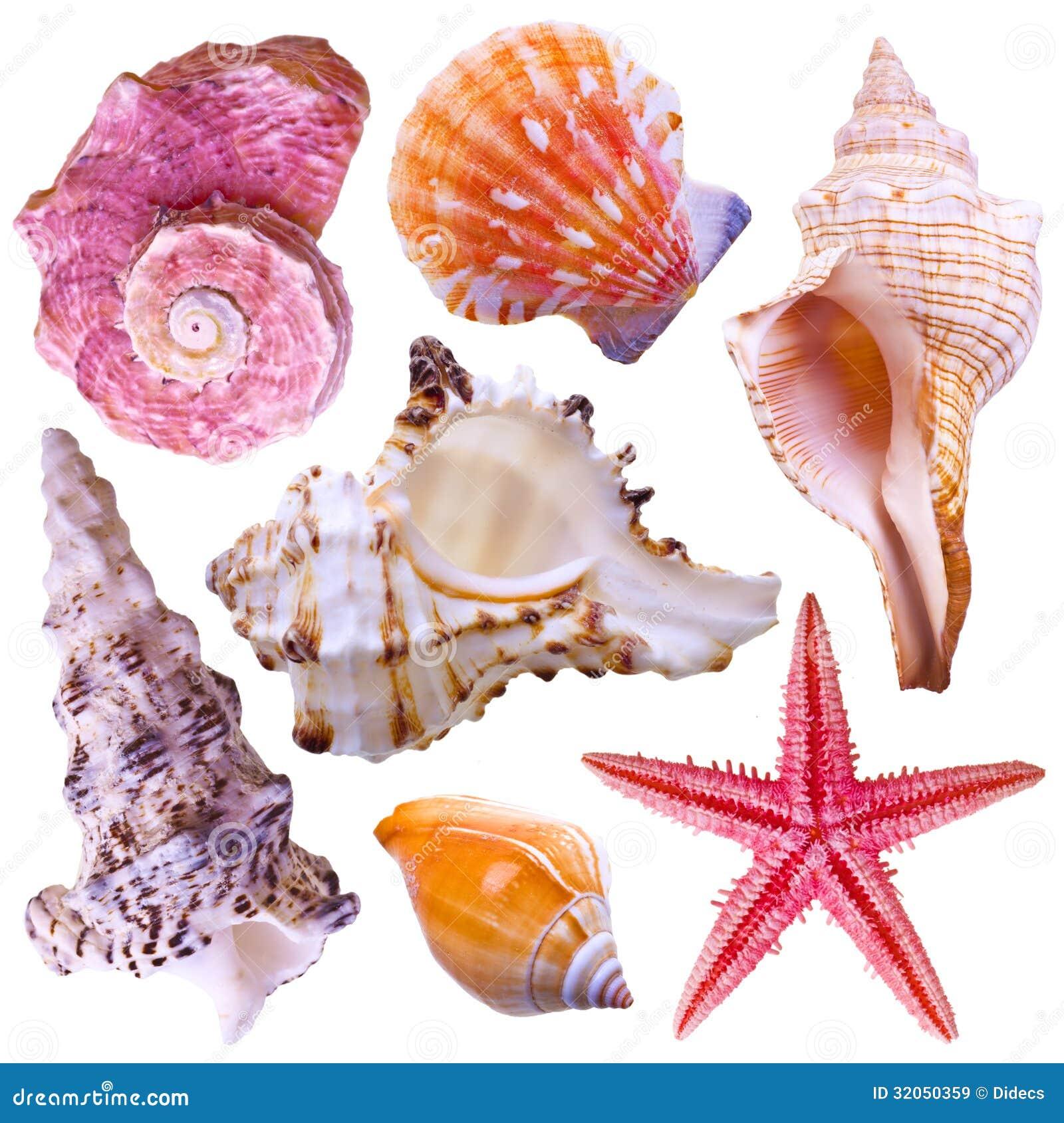 Coleção de escudos do mar