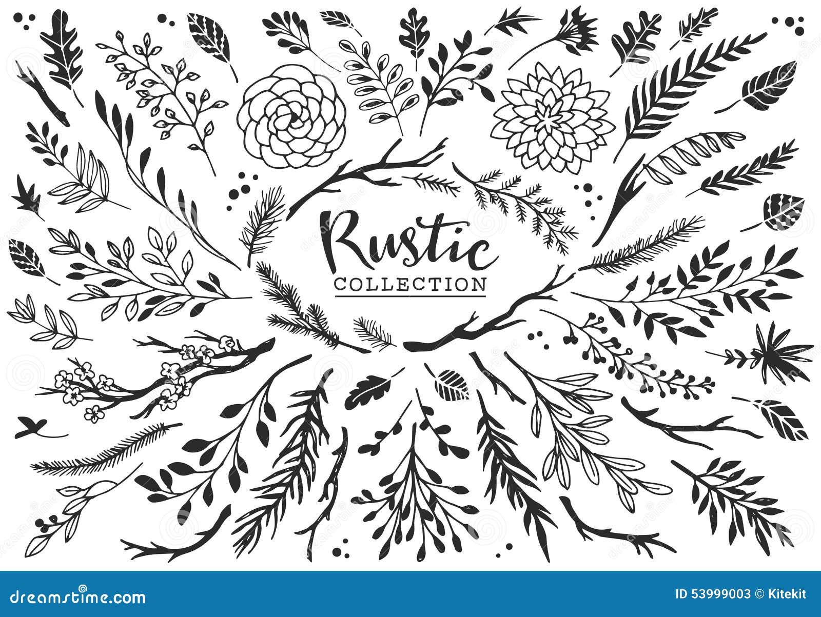 Coleção decorativa rústica das plantas e das flores Mão desenhada