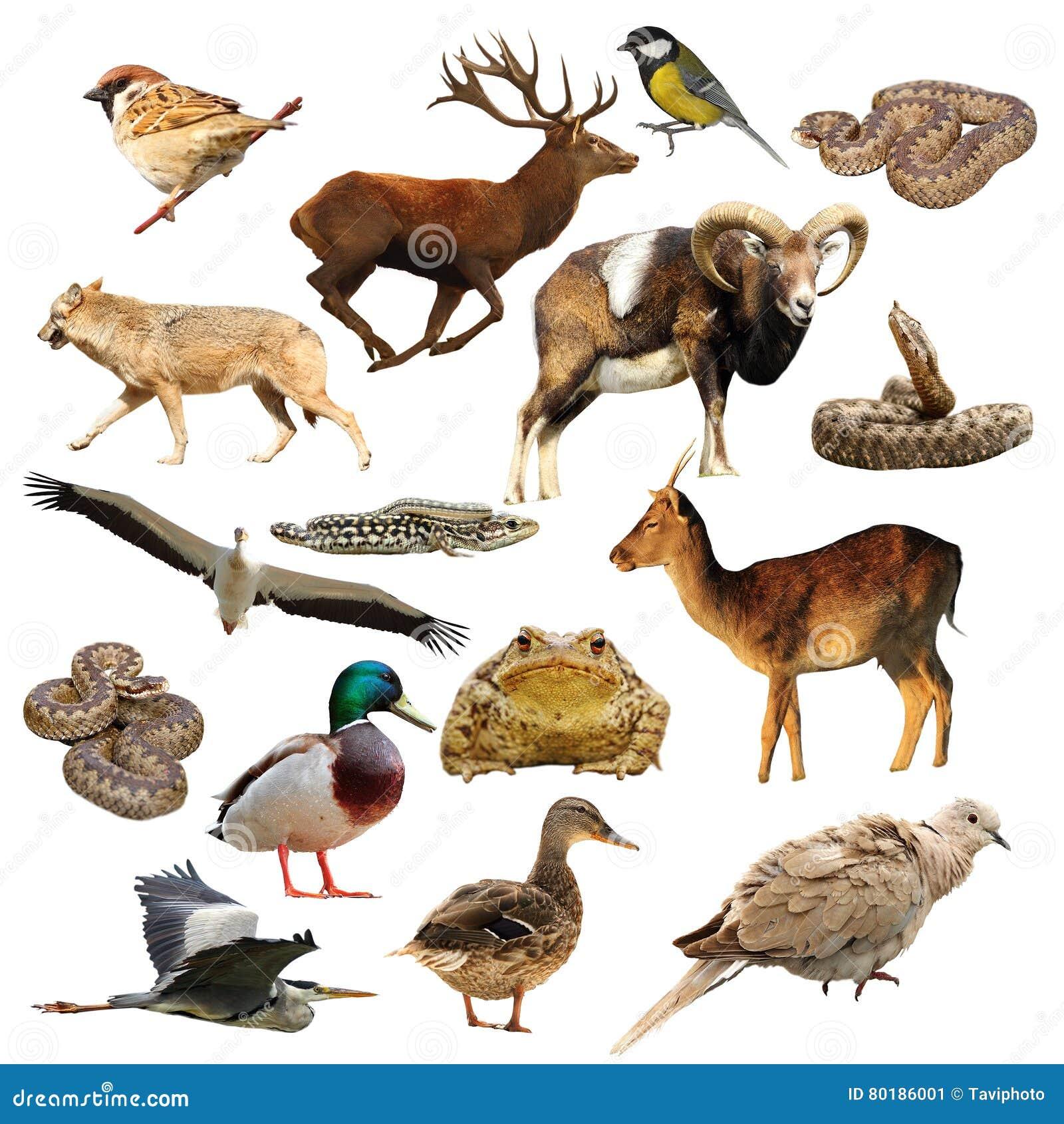 Coleção dos animais selvagens sobre o branco