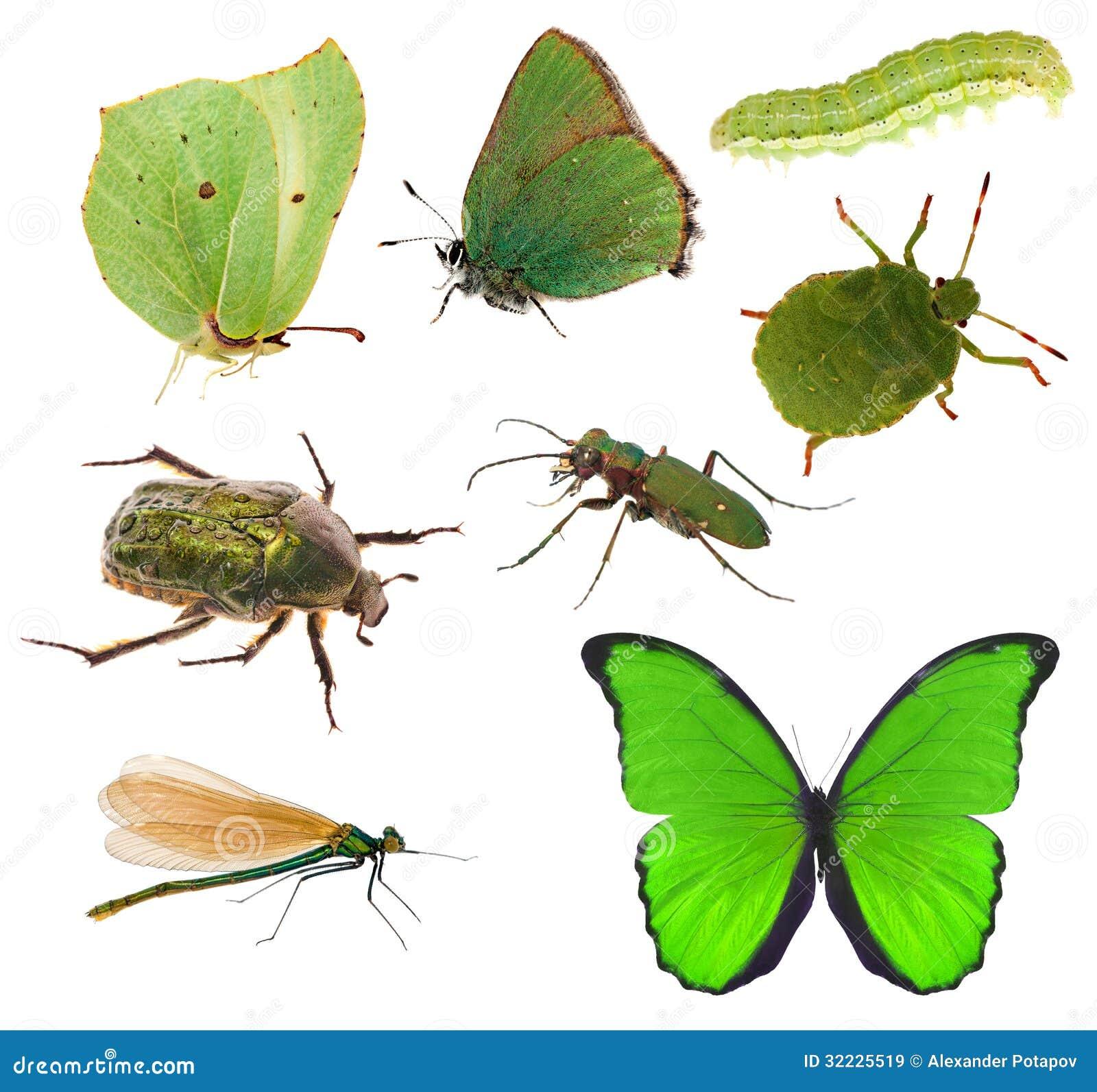 Download Coleção Dos Insetos Da Cor Verde Isolada No Branco Imagem de Stock - Imagem de outdoors, planta: 32225519