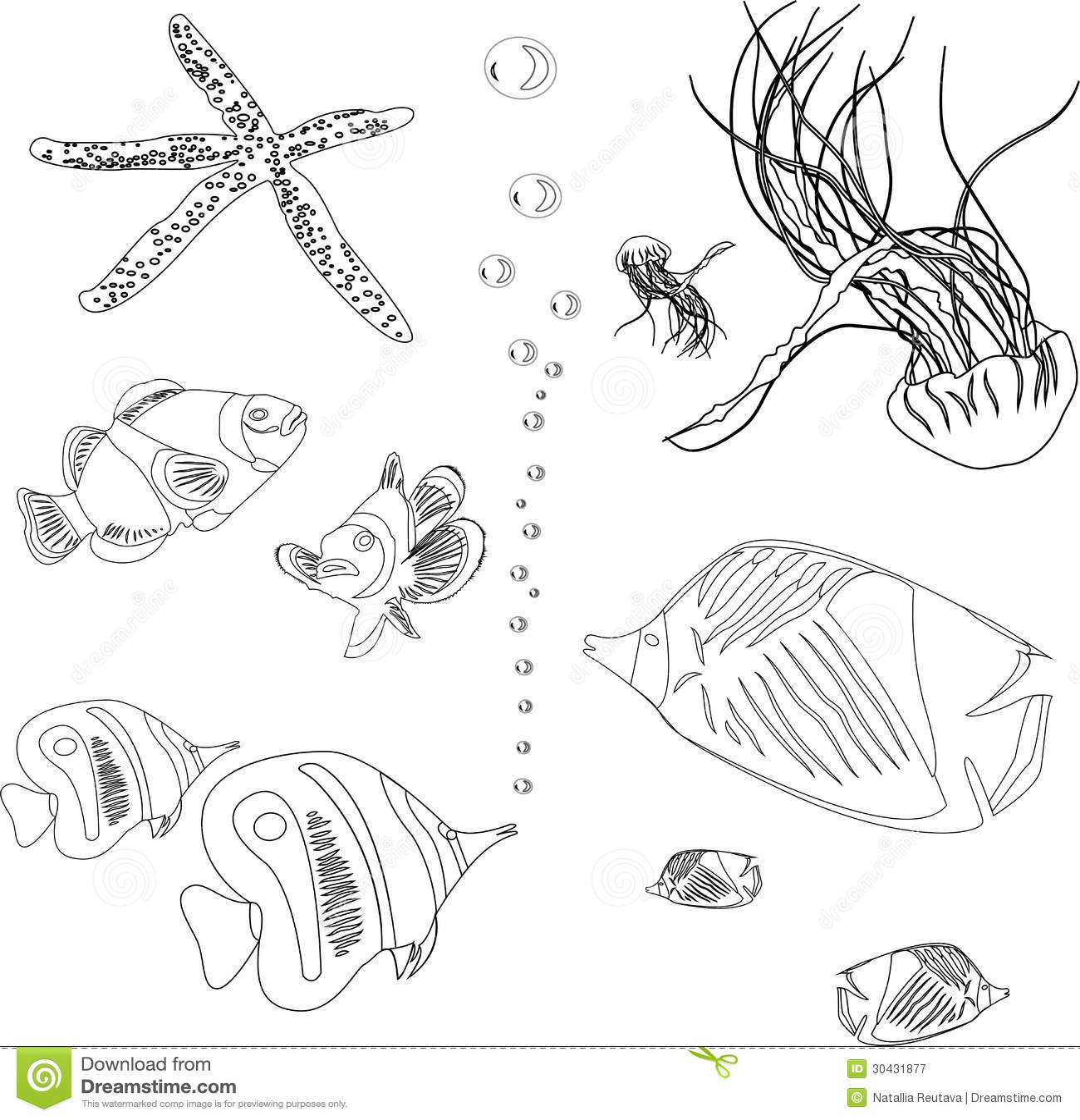 Cole o dos peixes do mar vermelho medusa estrela do mar for Fondali marini da colorare