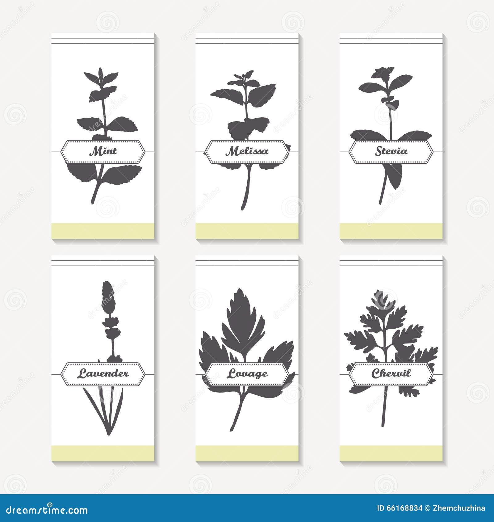 Coleção picante das silhuetas das ervas Entregue a hortelã tirada, melissa, stevia, alfazema, lovage, cerefólio