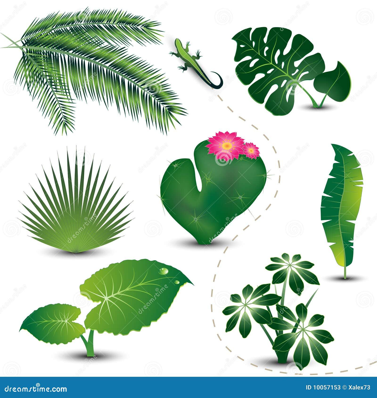 Coleção tropical das folhas