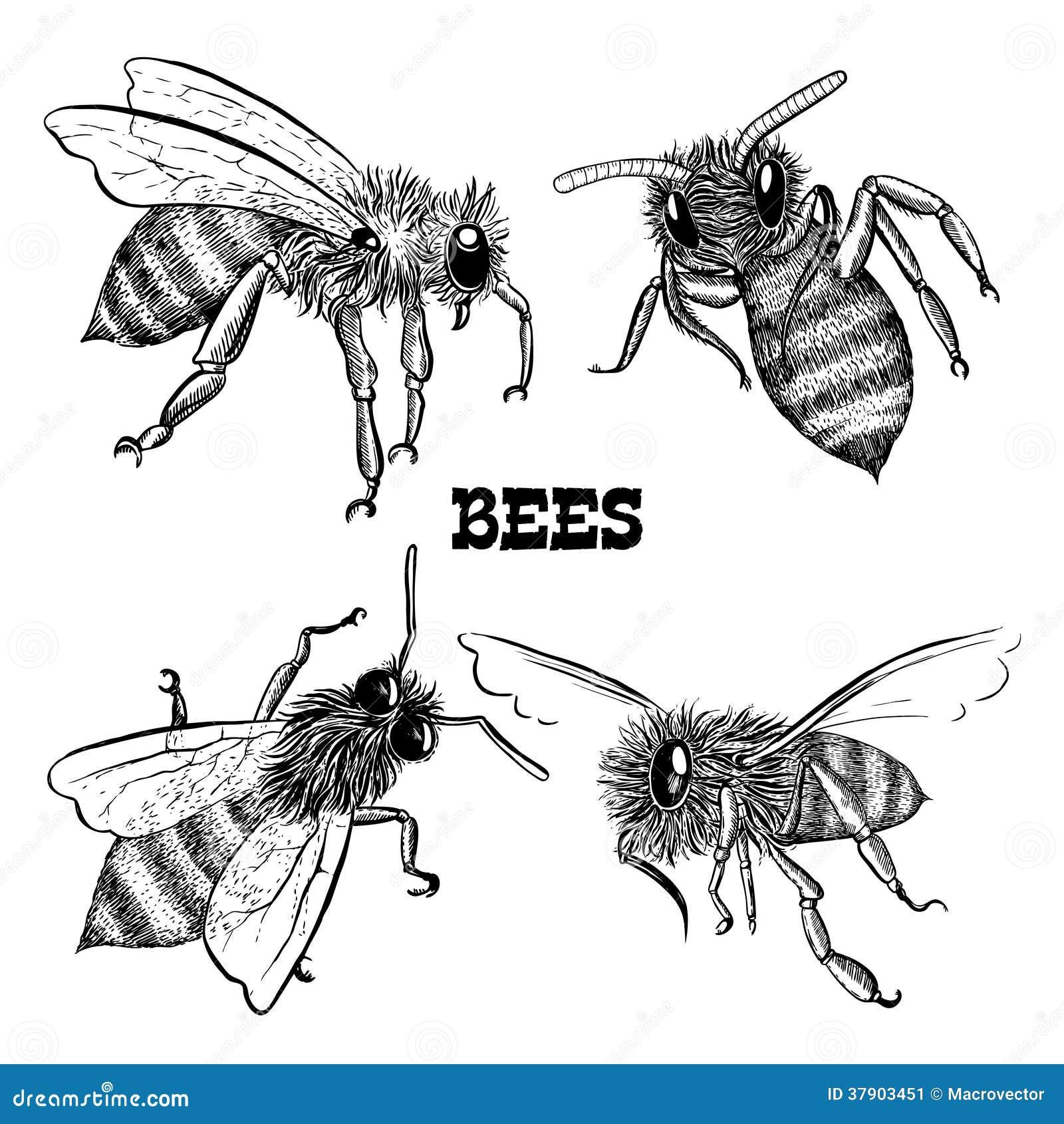 Coleções de ícones da abelha do mel