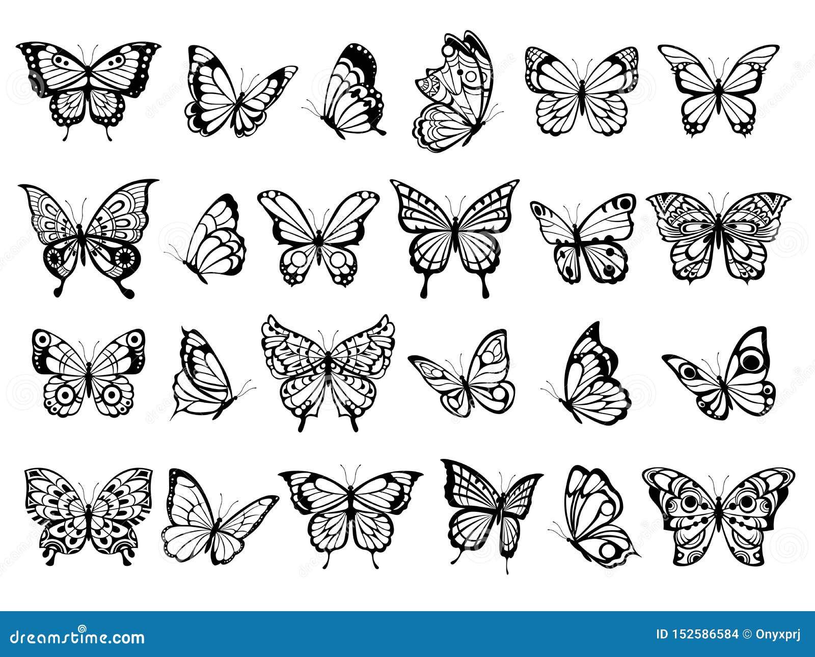 Cole??o da borboleta Desenho bonito do inseto de voo da natureza, borboletas pretas exóticas com imagens engraçadas do vetor das