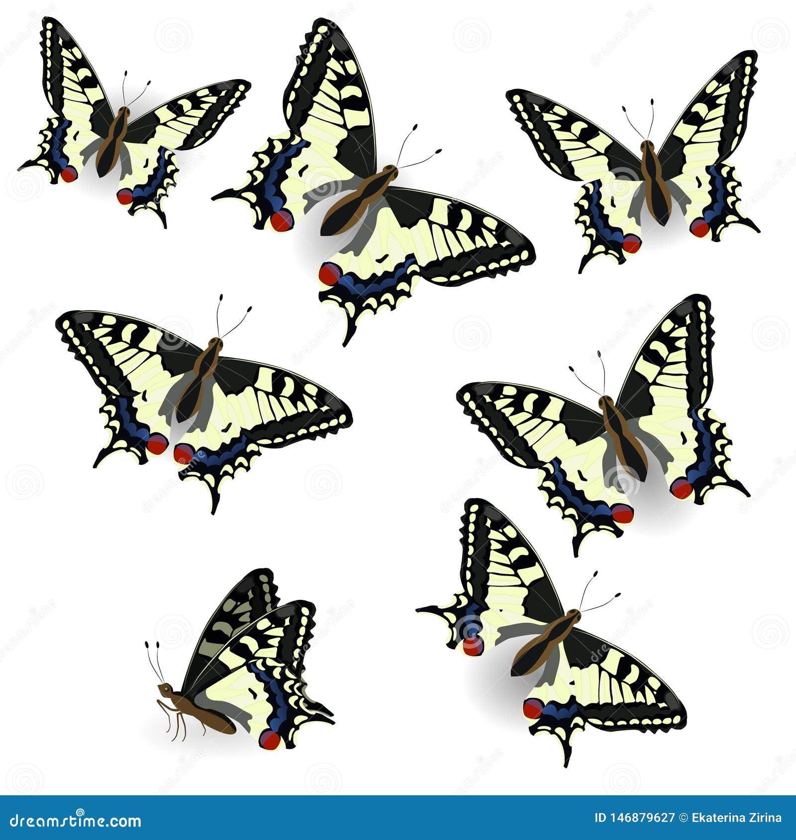 Cole??o da borboleta Swallowtail real?stico Ilustra??o do vetor do isolado no fundo puro Pode ser usado como o elemento do projet