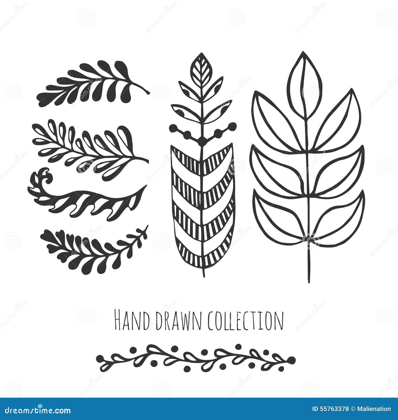 Colección étnica Con Las Hojas Estilizadas Del Garabato Plantilla ...