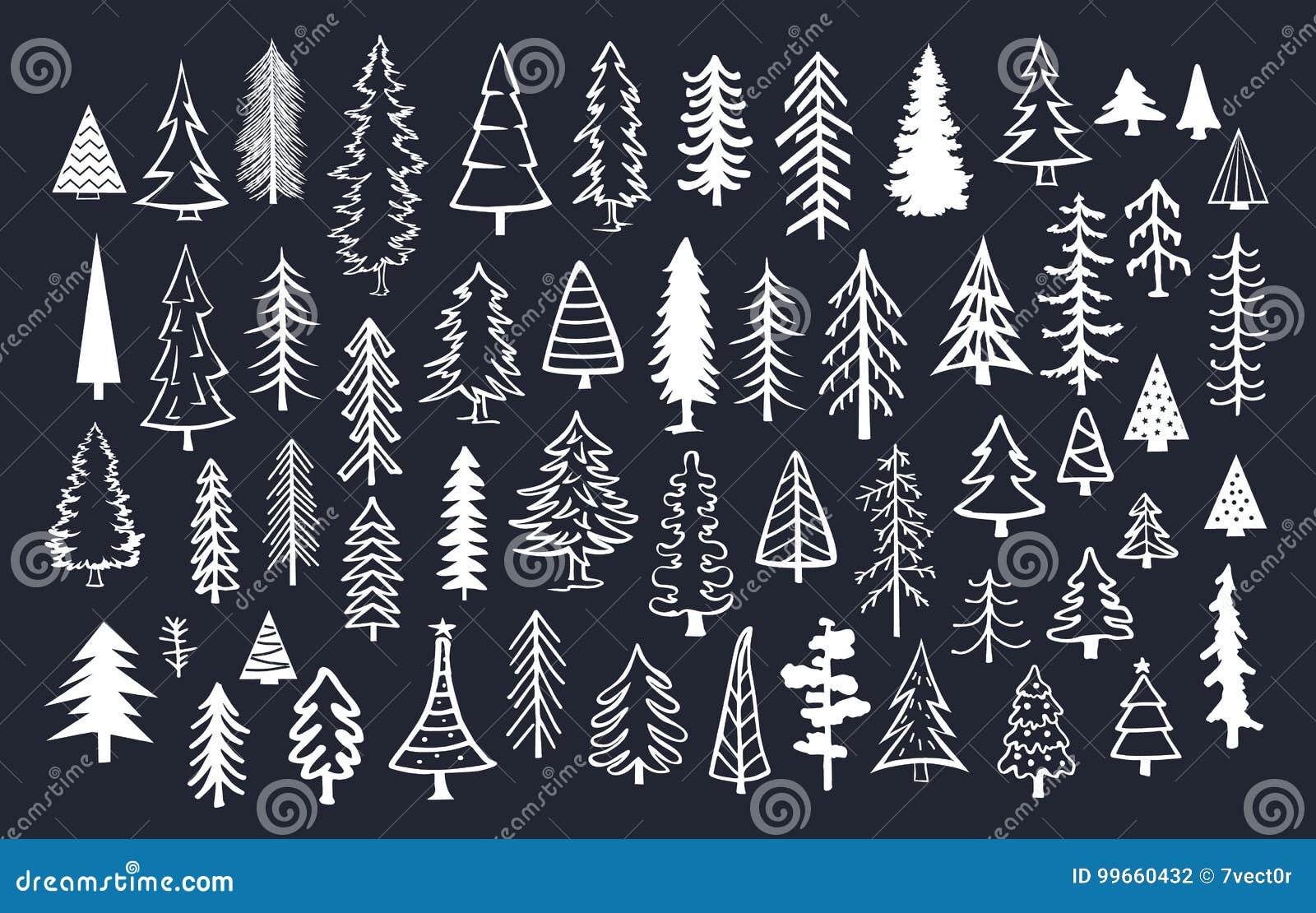 Colección de árboles de la conífera del abeto del pino del garabato