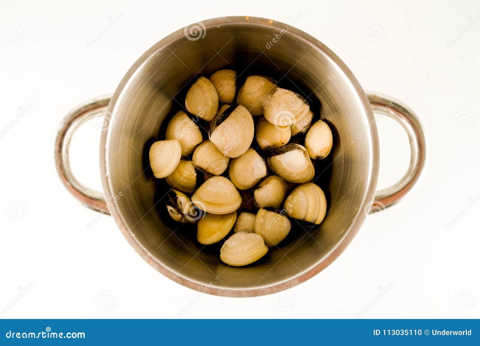 Colección de diversas cáscaras de la almeja