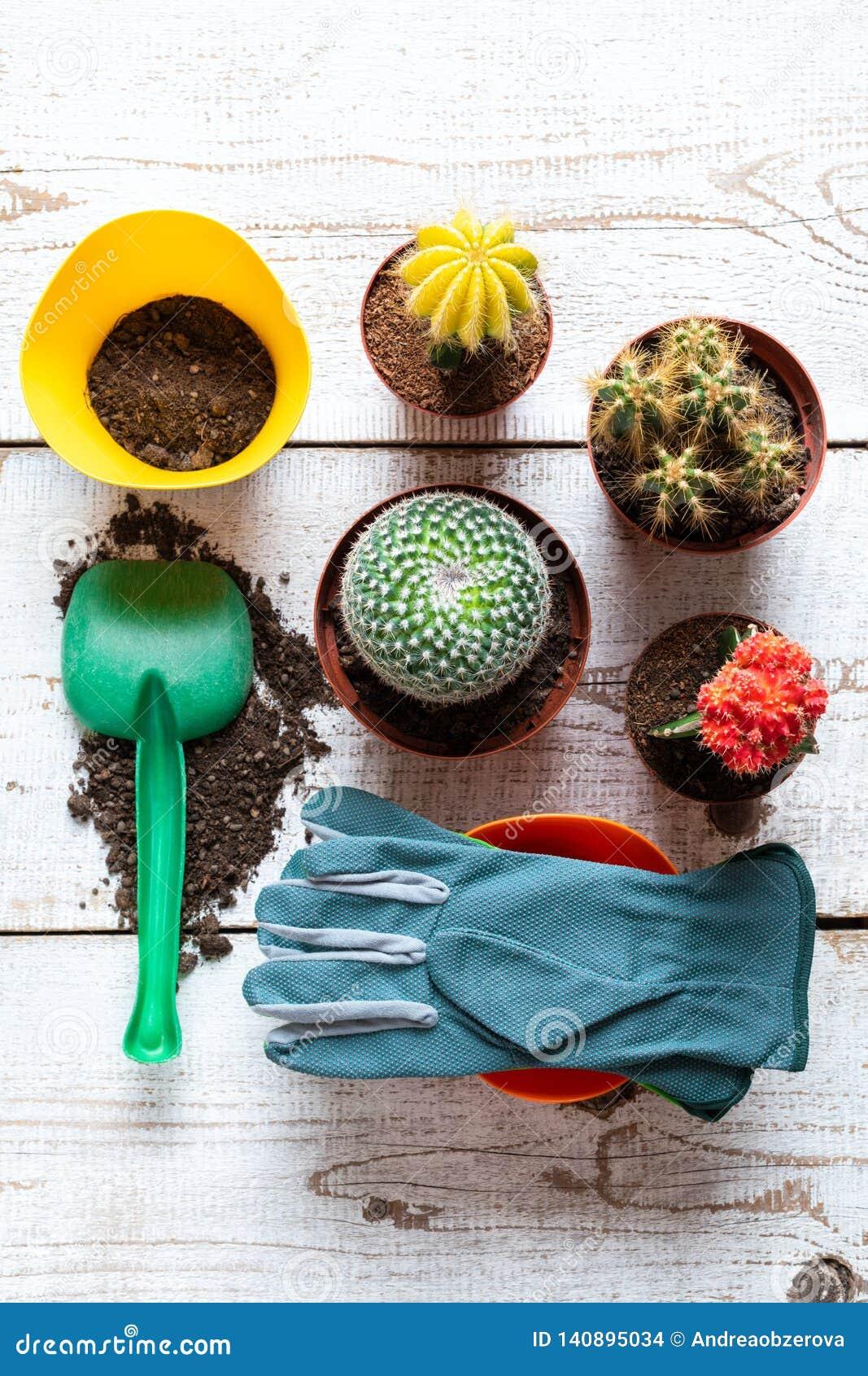 Colección de diversas plantas florecientes del cactus, de guantes que cultivan un huerto, de suelo de rellenado y de paleta en el