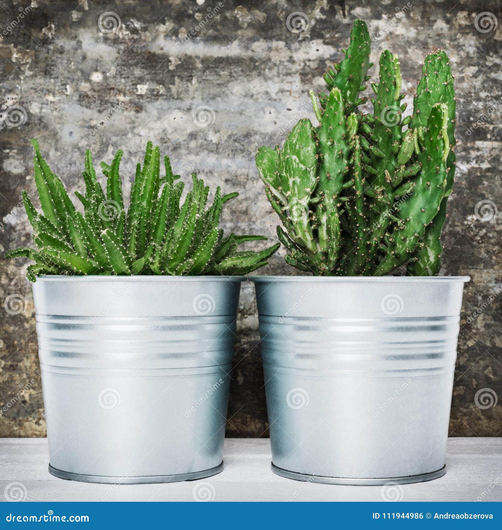 Colección de diverso cactus en conserva y de plantas suculentas Plantas en conserva de la casa del cactus contra la pared retra d