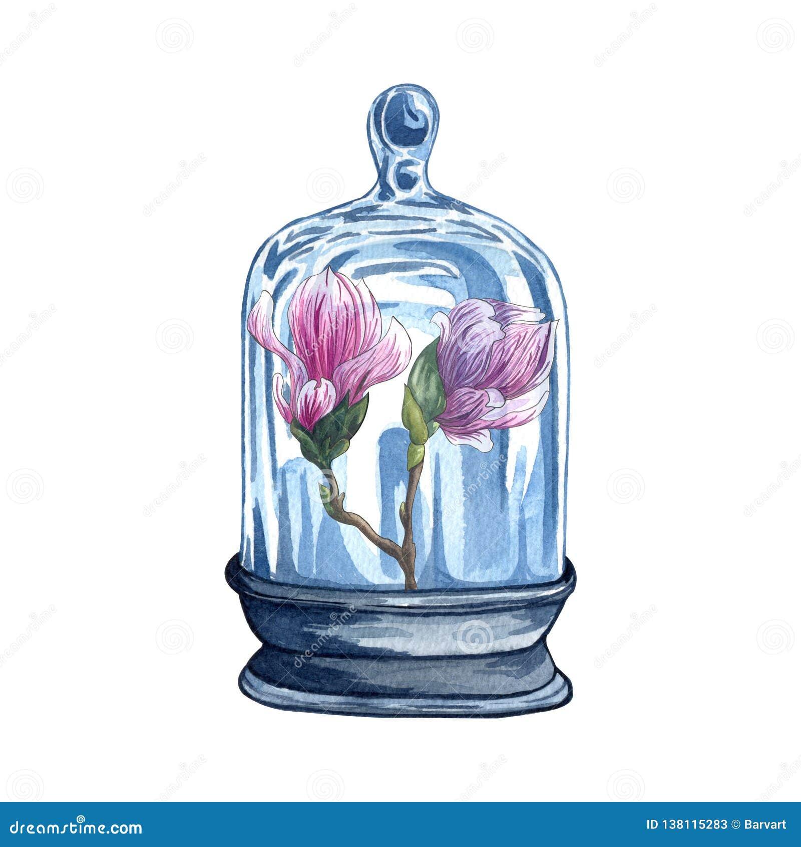Colección de florariums, tarro de la acuarela con la flor rosada de la magnolia