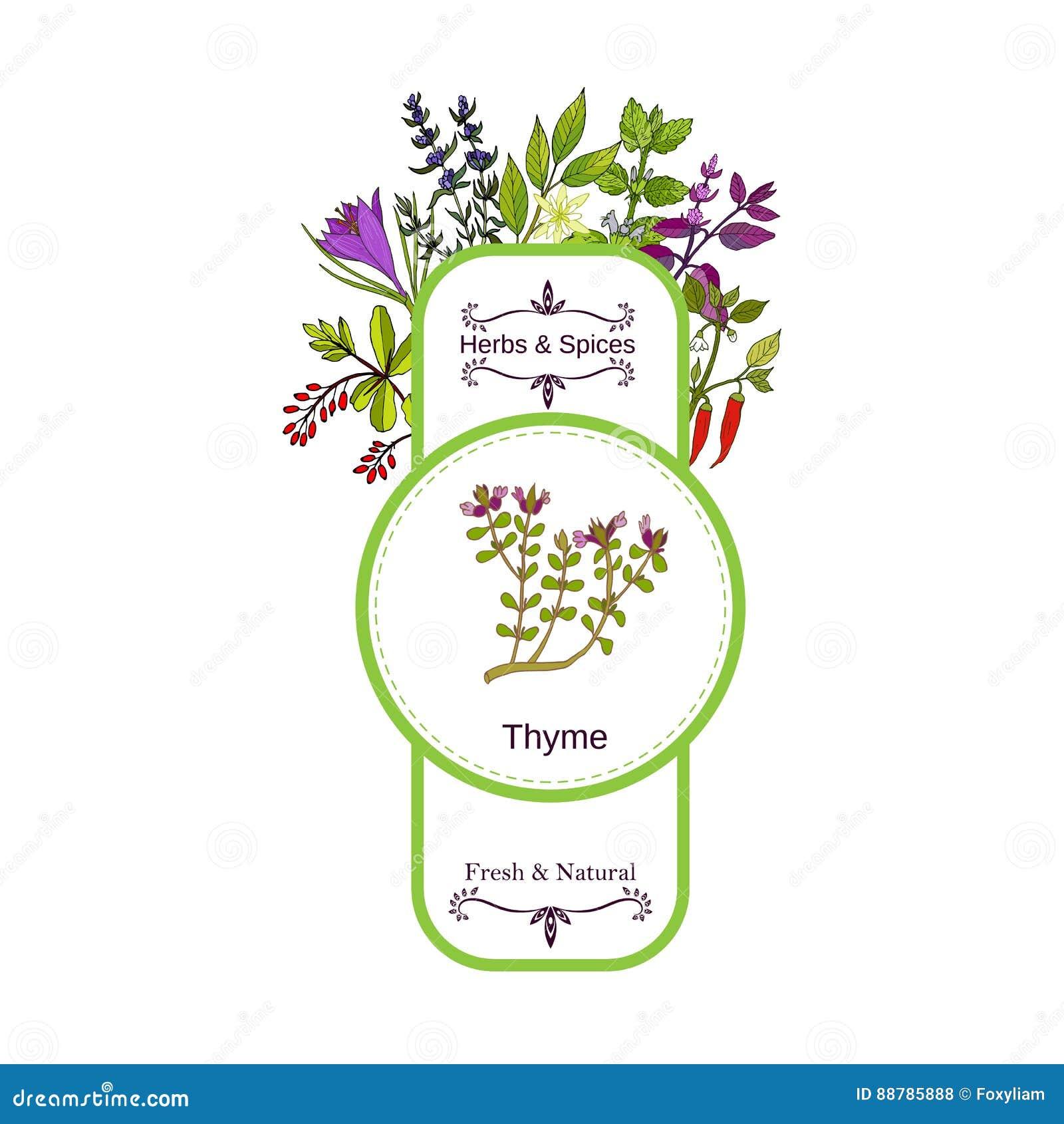 Colección de la etiqueta de las hierbas y de las especias del vintage Tomillo