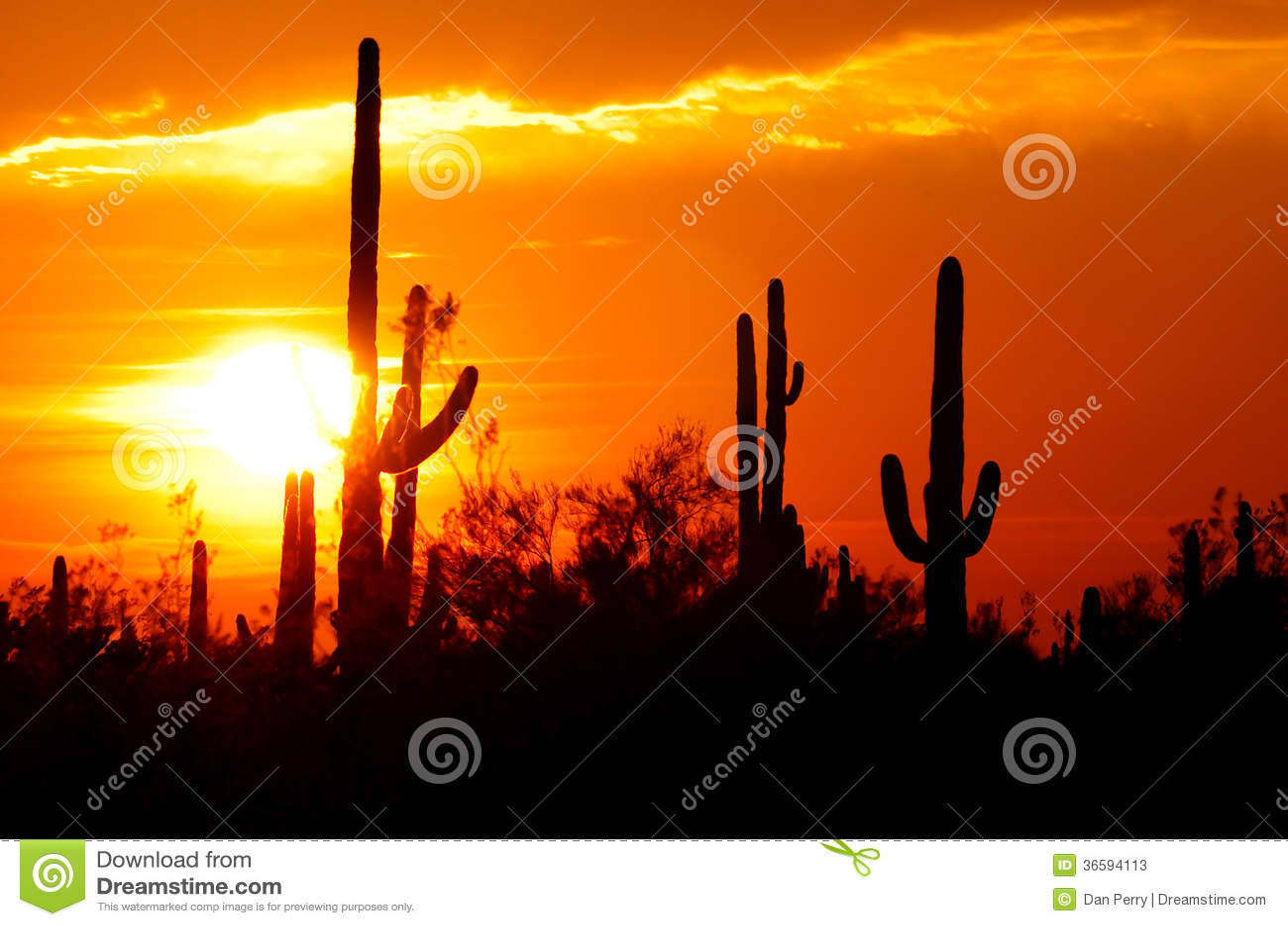 Colección de la puesta del sol del desierto