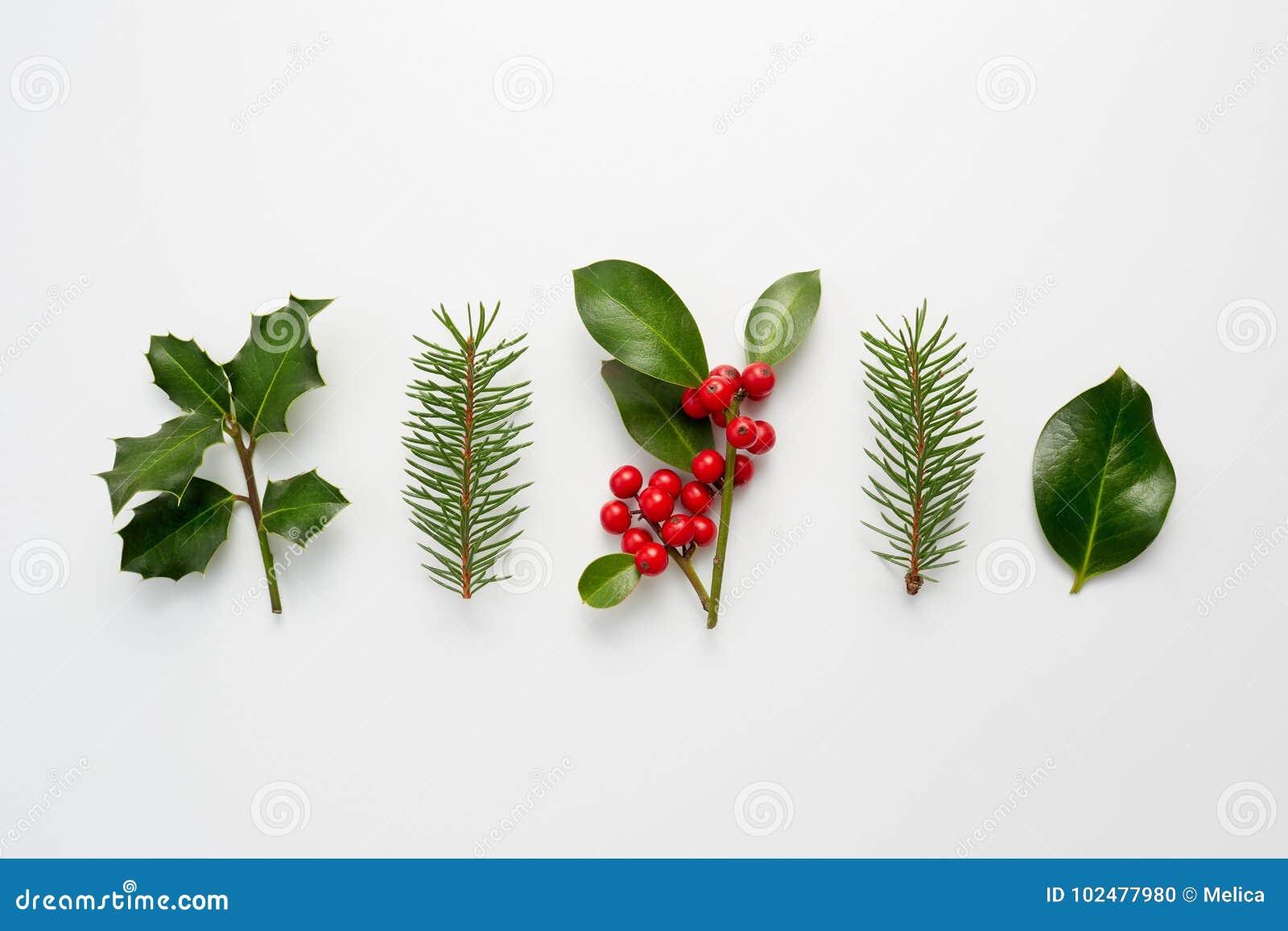 Colecci n de plantas decorativas de la navidad con las for Plantas decorativas hojas