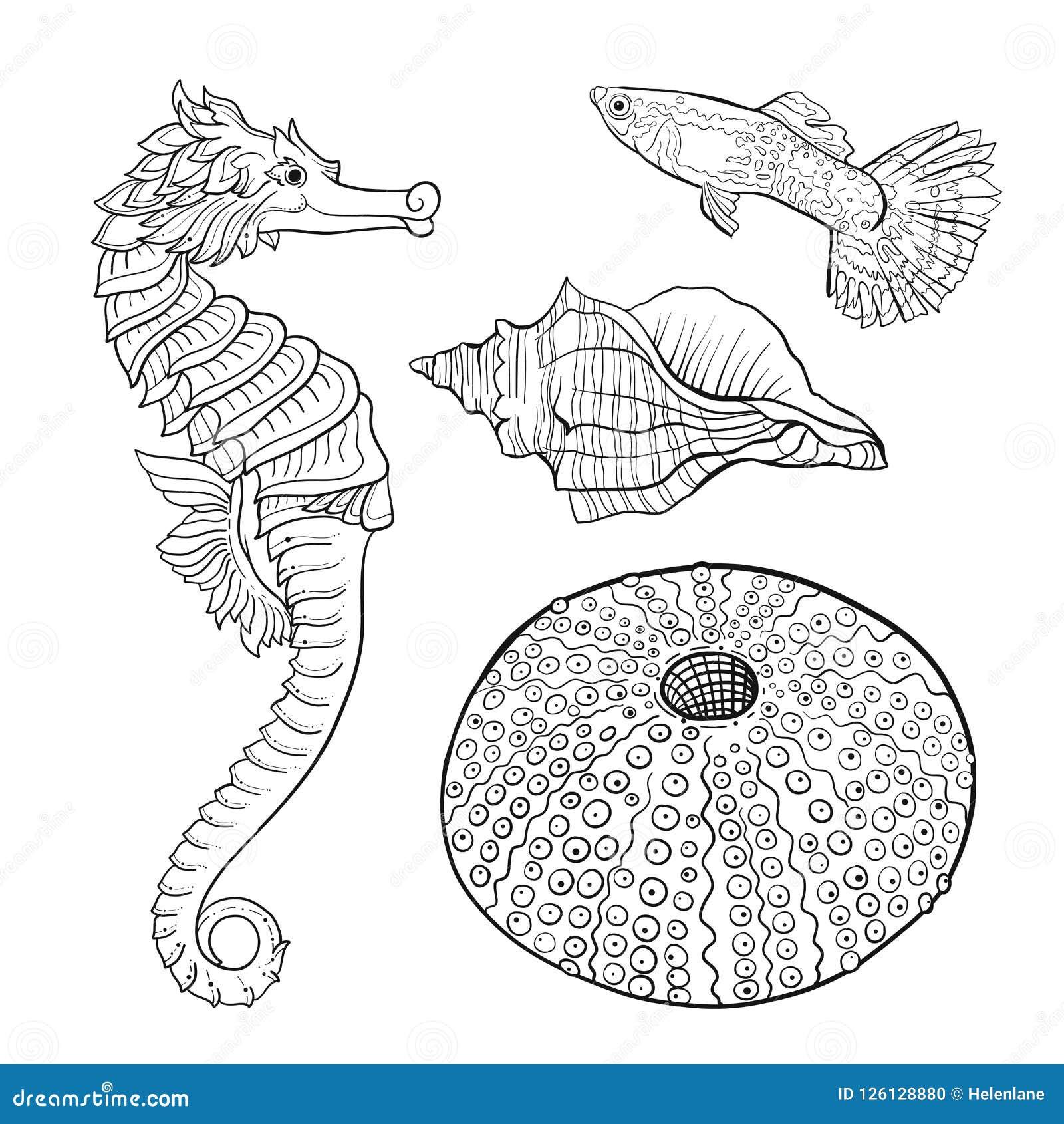 Colección del mar Ejemplo coloreado dibujado mano original