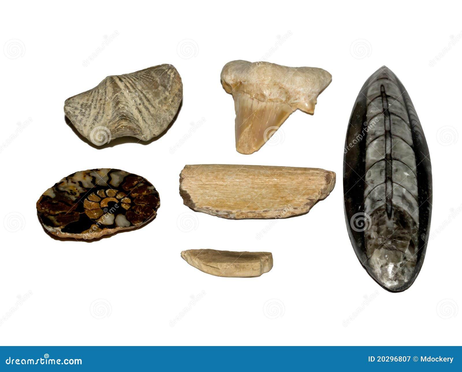 Colección fósil