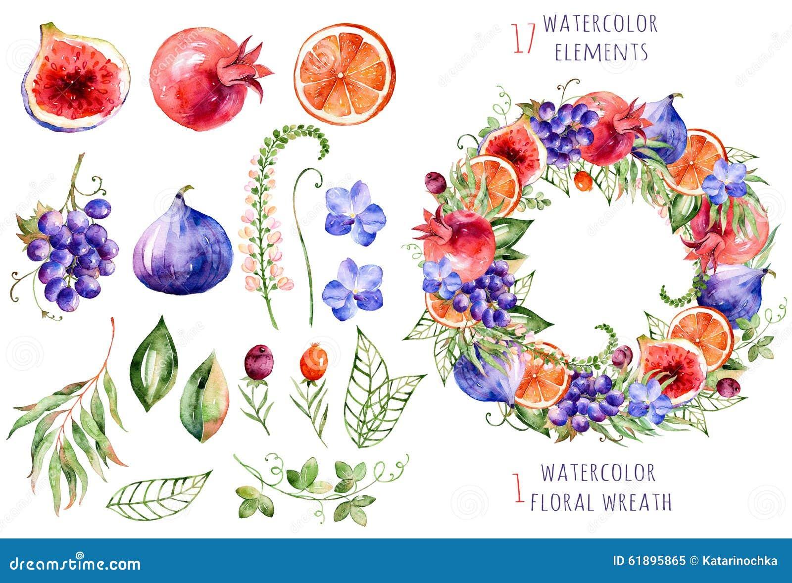 Colección floral y de las frutas colorida con las orquídeas, las flores, las hojas, la granada, la uva, la naranja, los higos y l