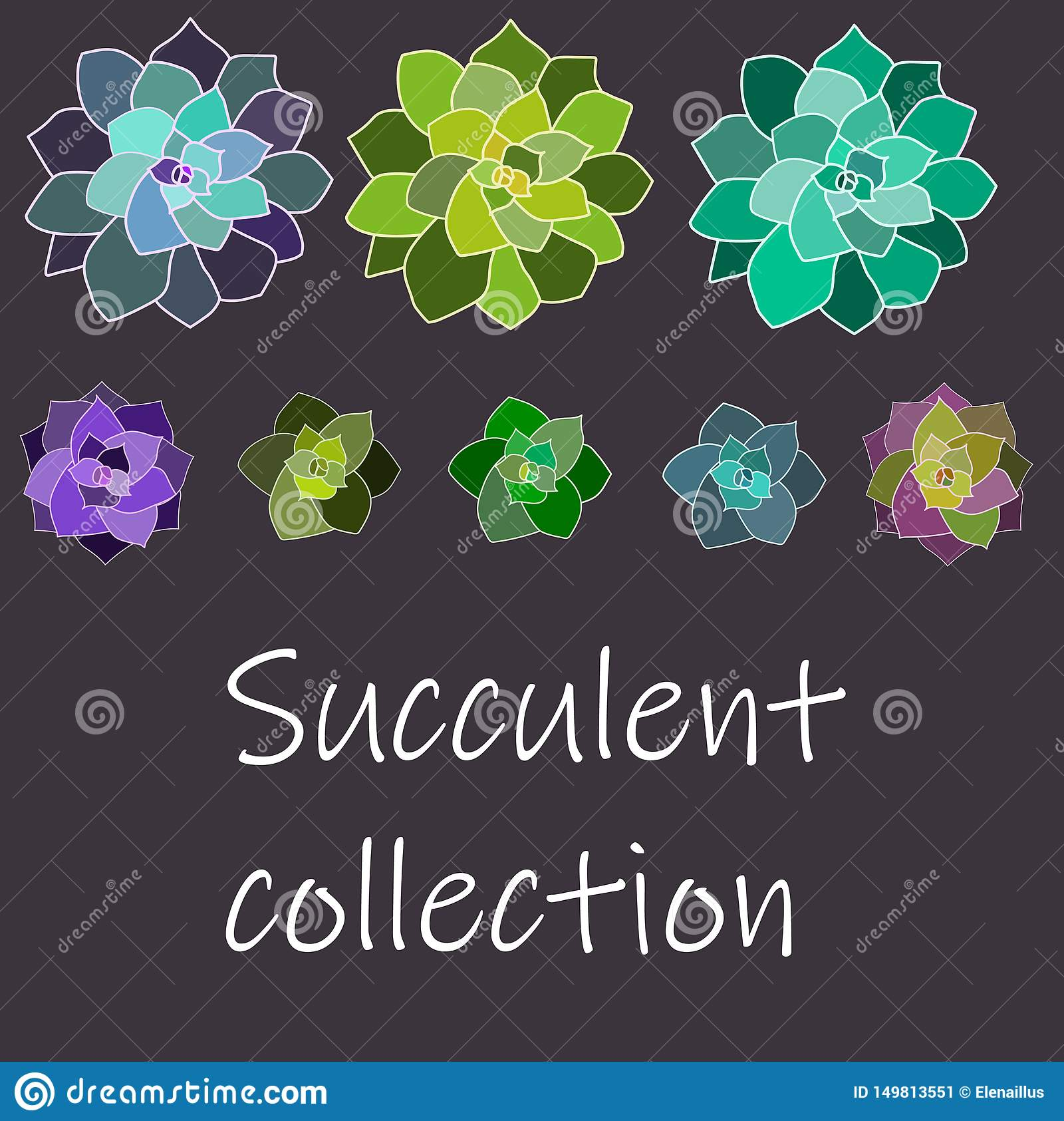 Colección suculenta del vector, sistema con los contornos blancos Aislado