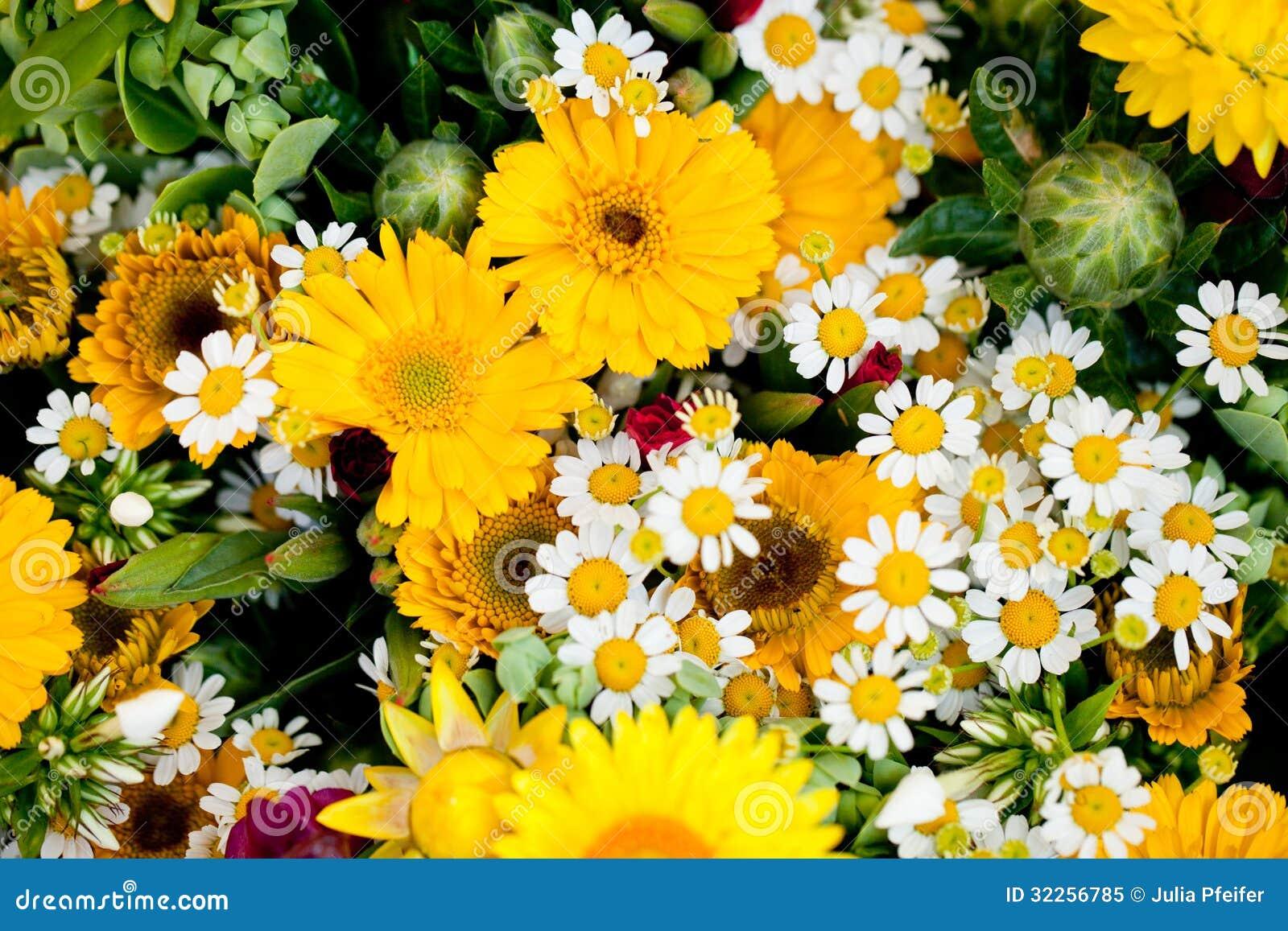 Colecci n colorida hermosa de celebraci n del verano de la - Flores de verano ...