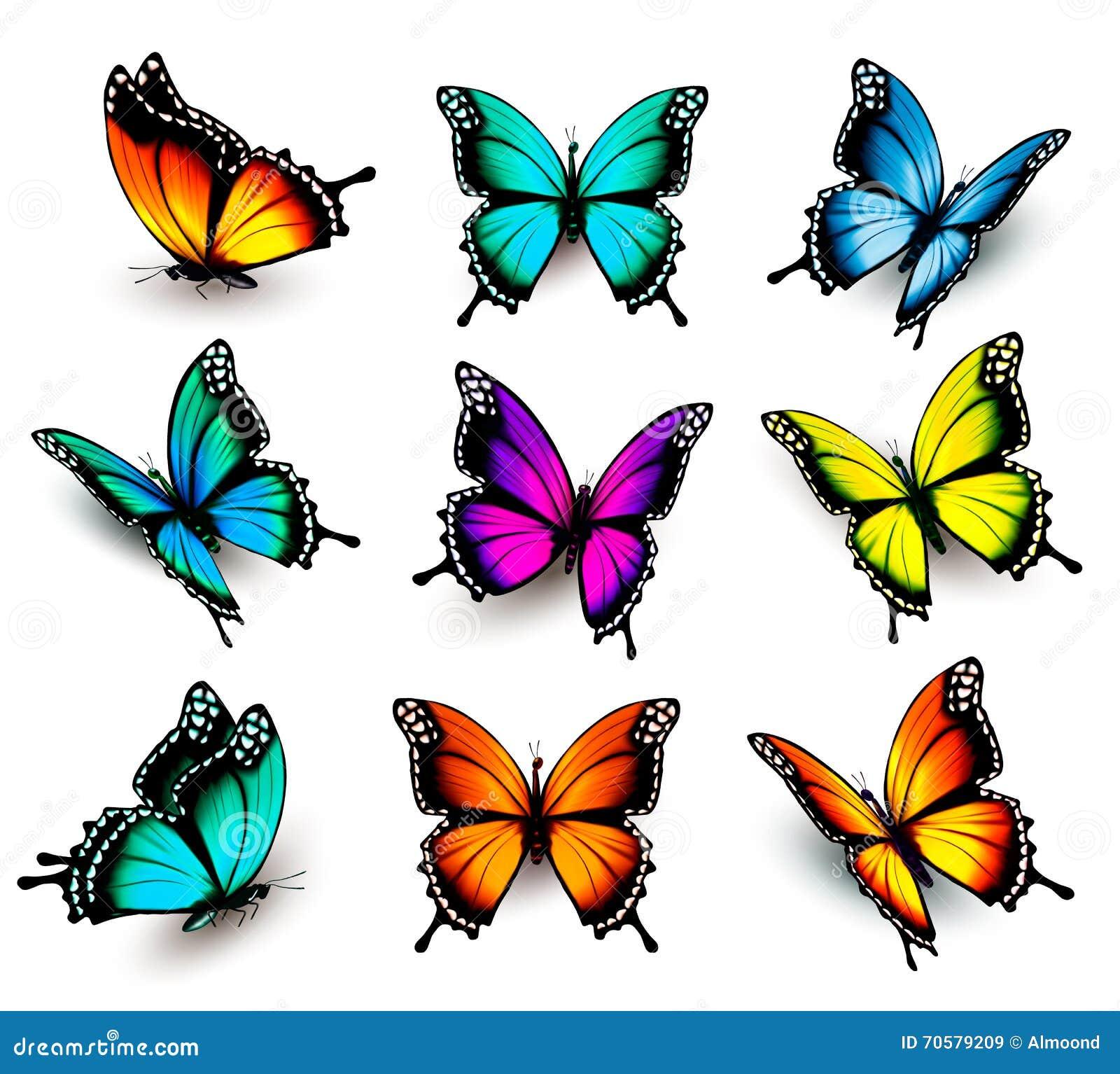imagens de borboletas coloridas pequenas