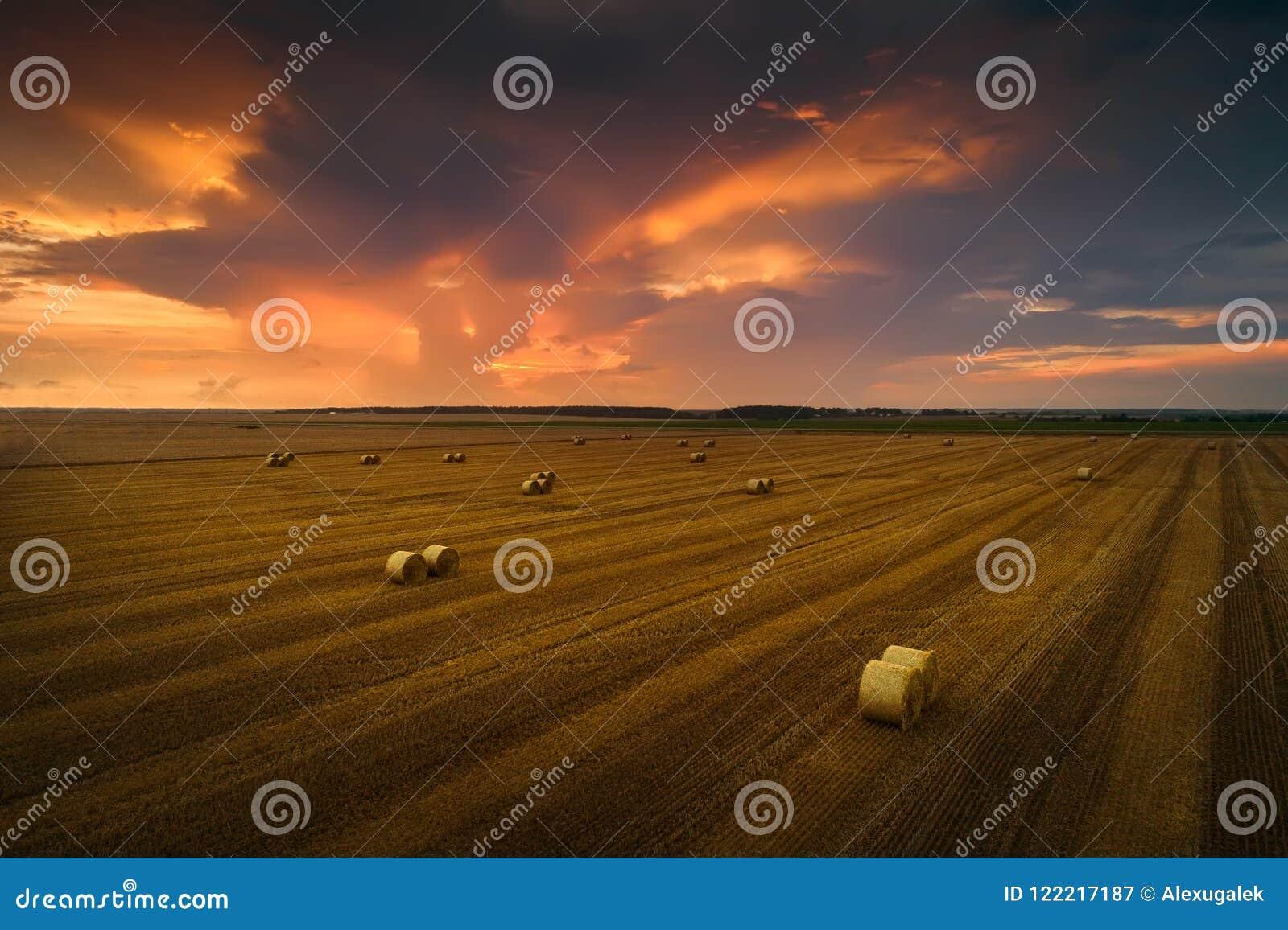 Colheita do outono Pilhas da palha em um campo chanfrado no por do sol