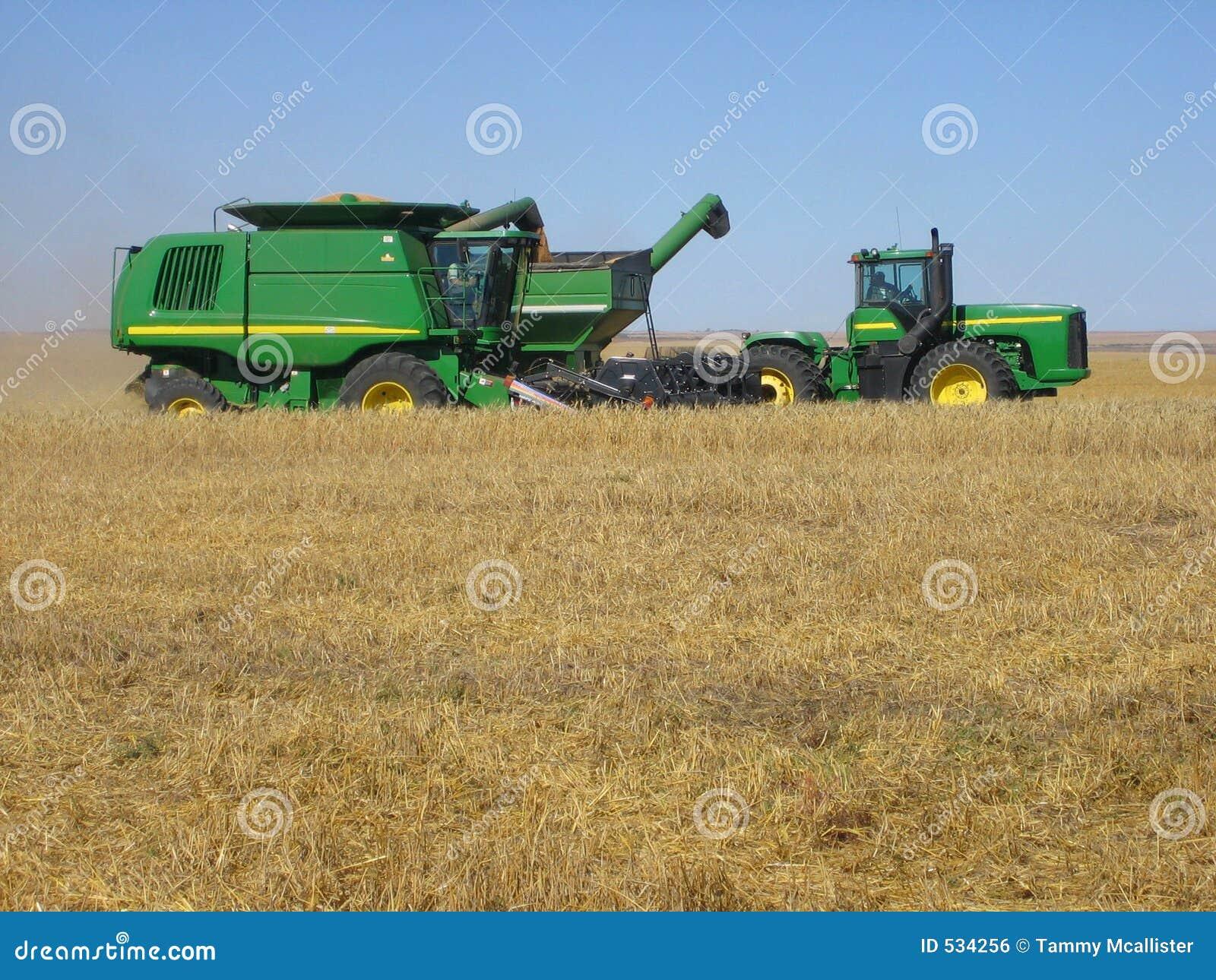 Colhendo o trigo