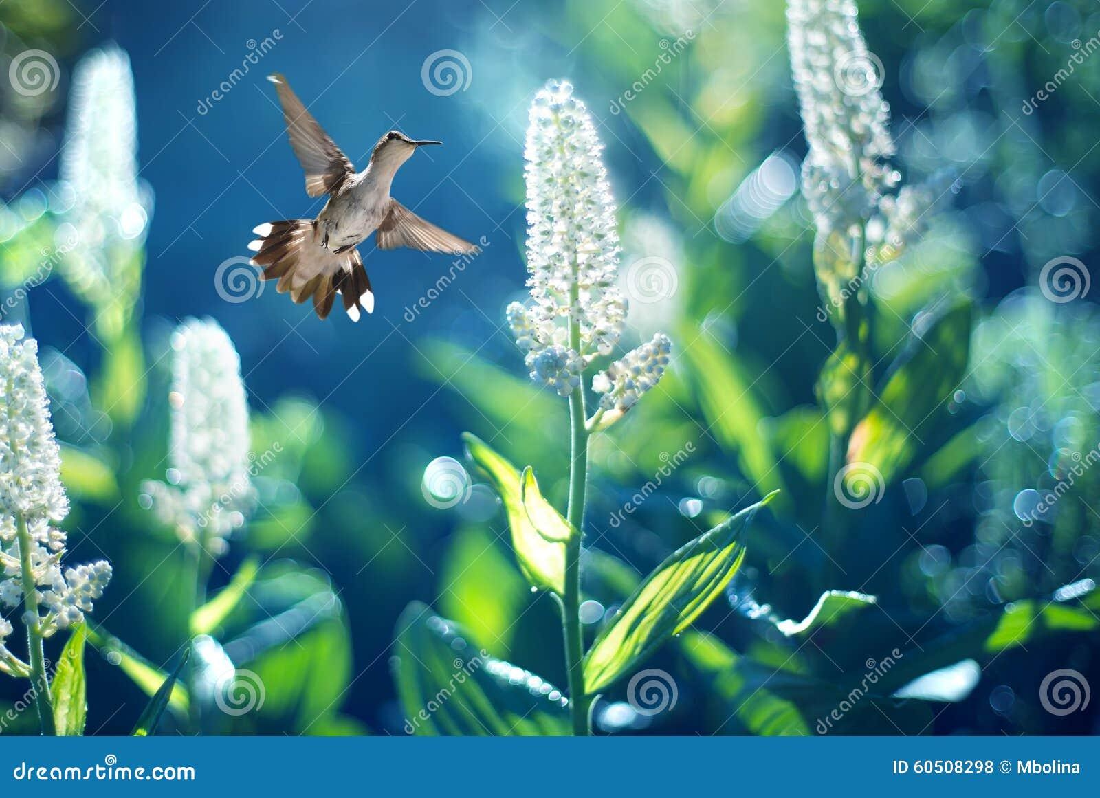 Colibrì in volo