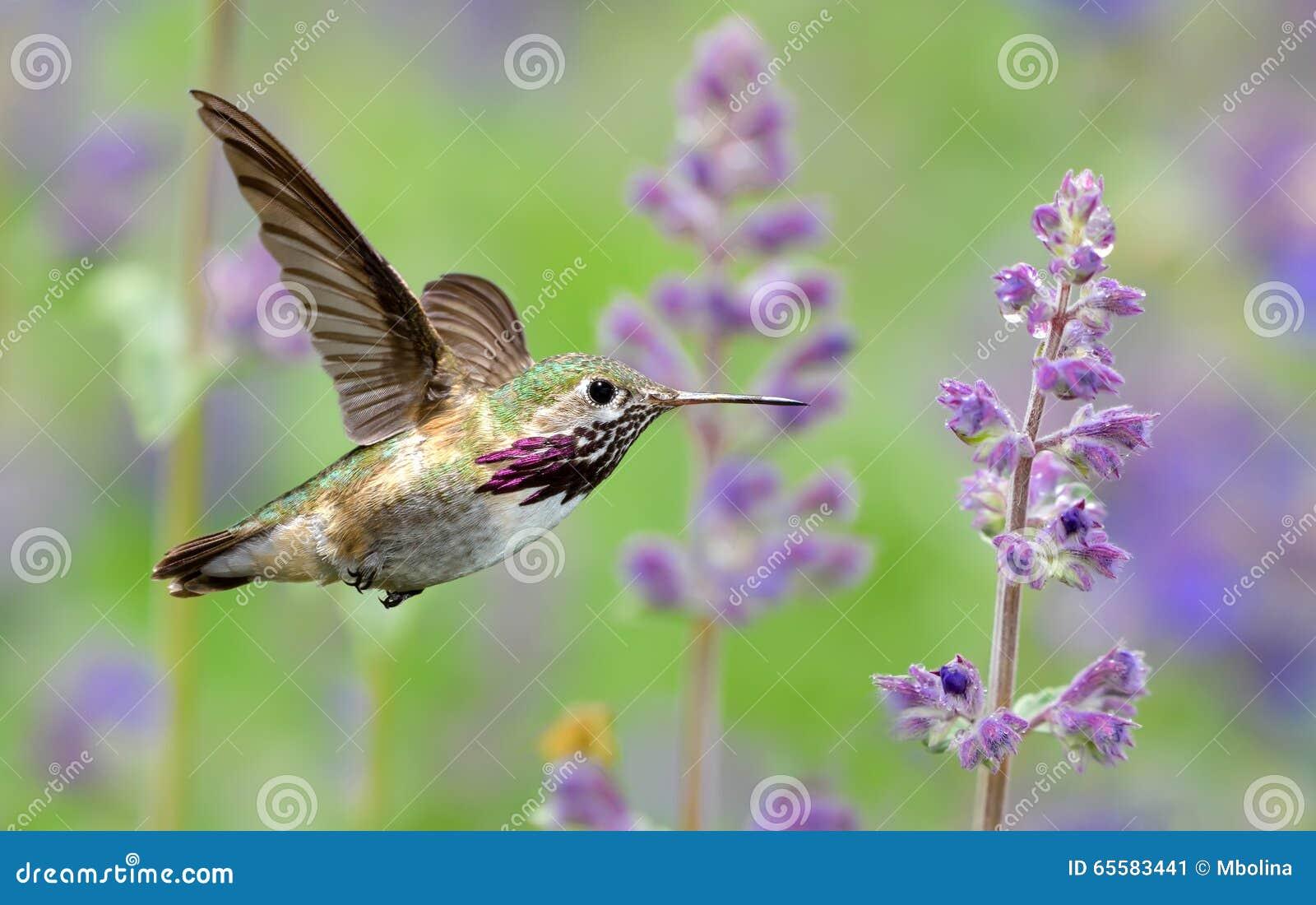 Lujoso Lavanda Uñas De Color Púrpura Motivo - Ideas Para Pintar Uñas ...