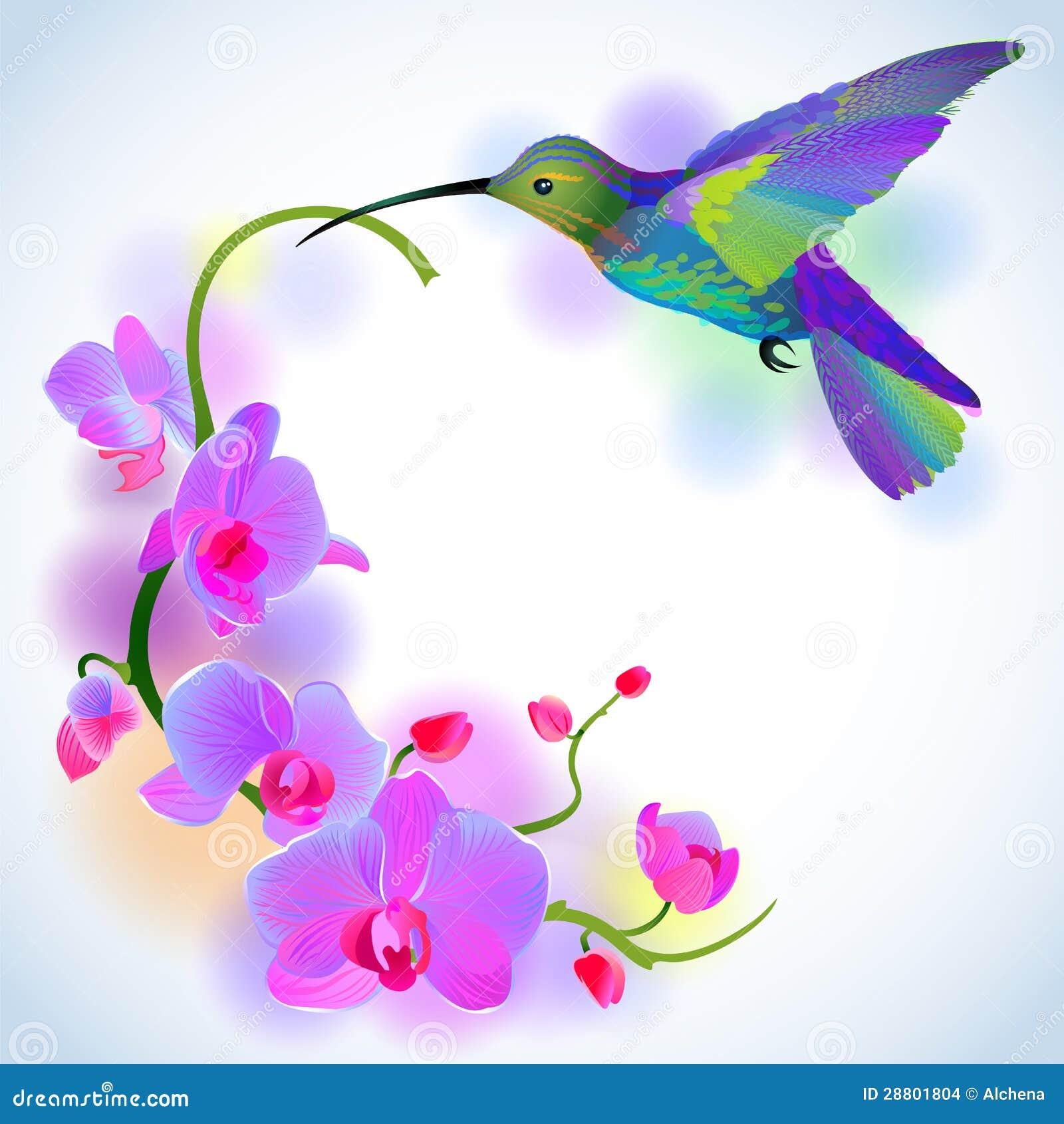 Colibrí del arco iris con las orquídeas violetas