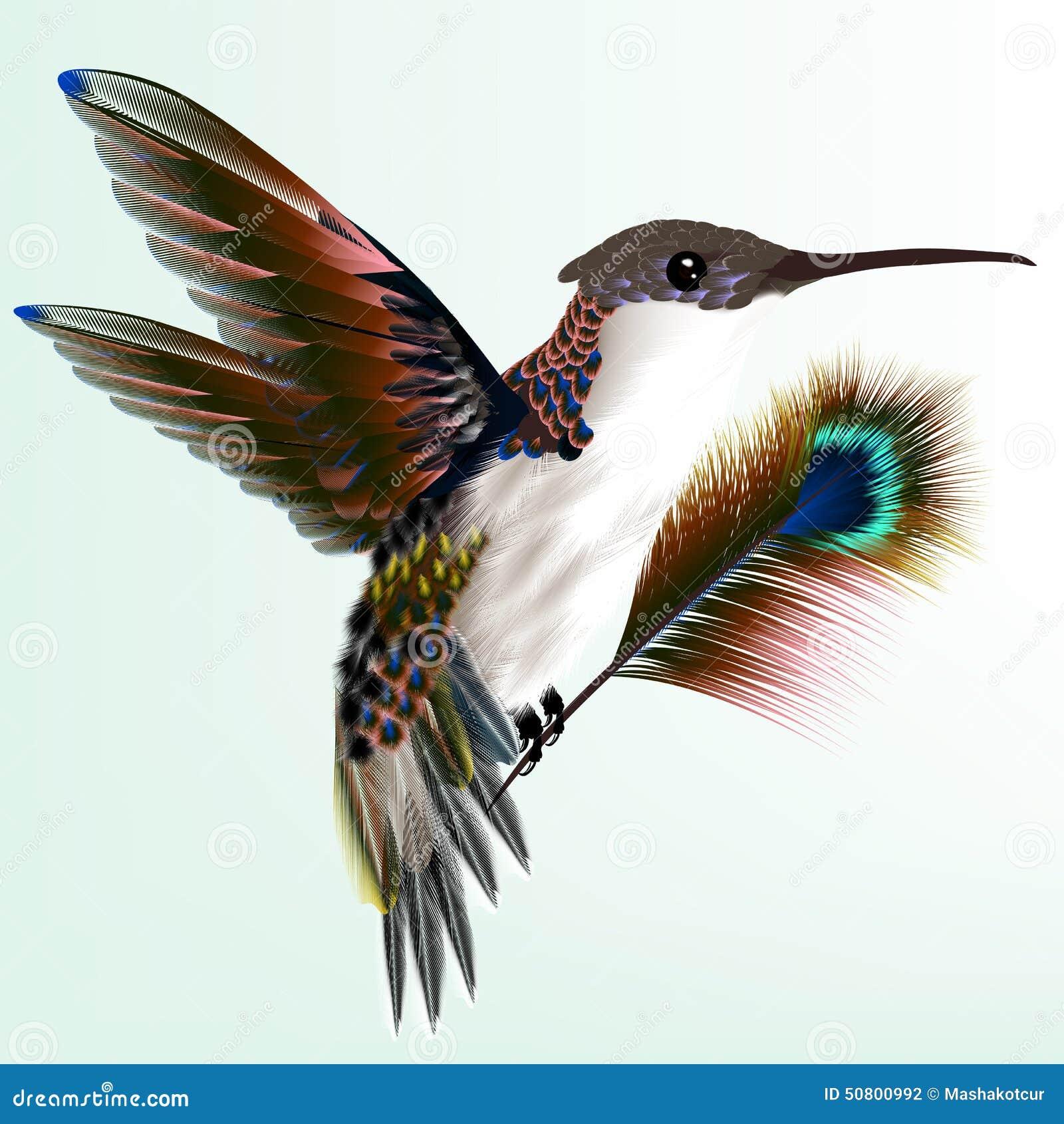 colibri color avec la plume de paon illustration de. Black Bedroom Furniture Sets. Home Design Ideas