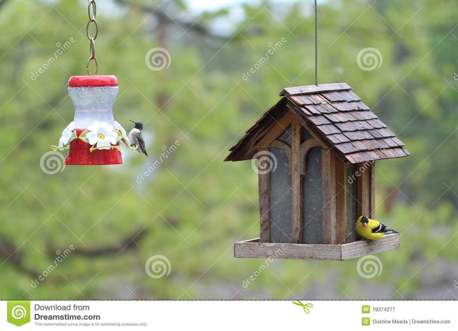Colibri e Goldfinch americano em Birdfeeders