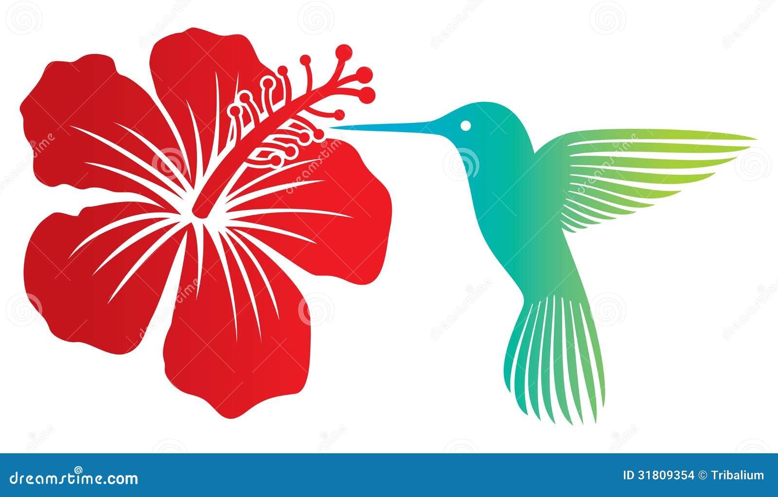 Colibri Hibiscus colibri and flower stock vector. illustration of animal - 31809354