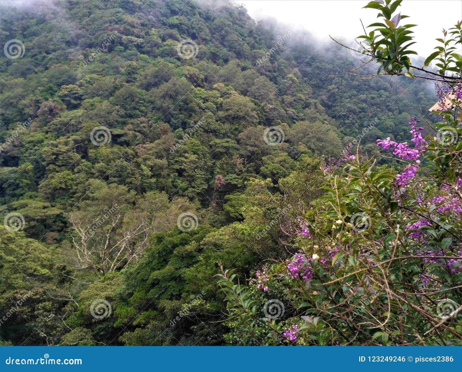 Colinas de Juan Castro Blanco National Park y de flores