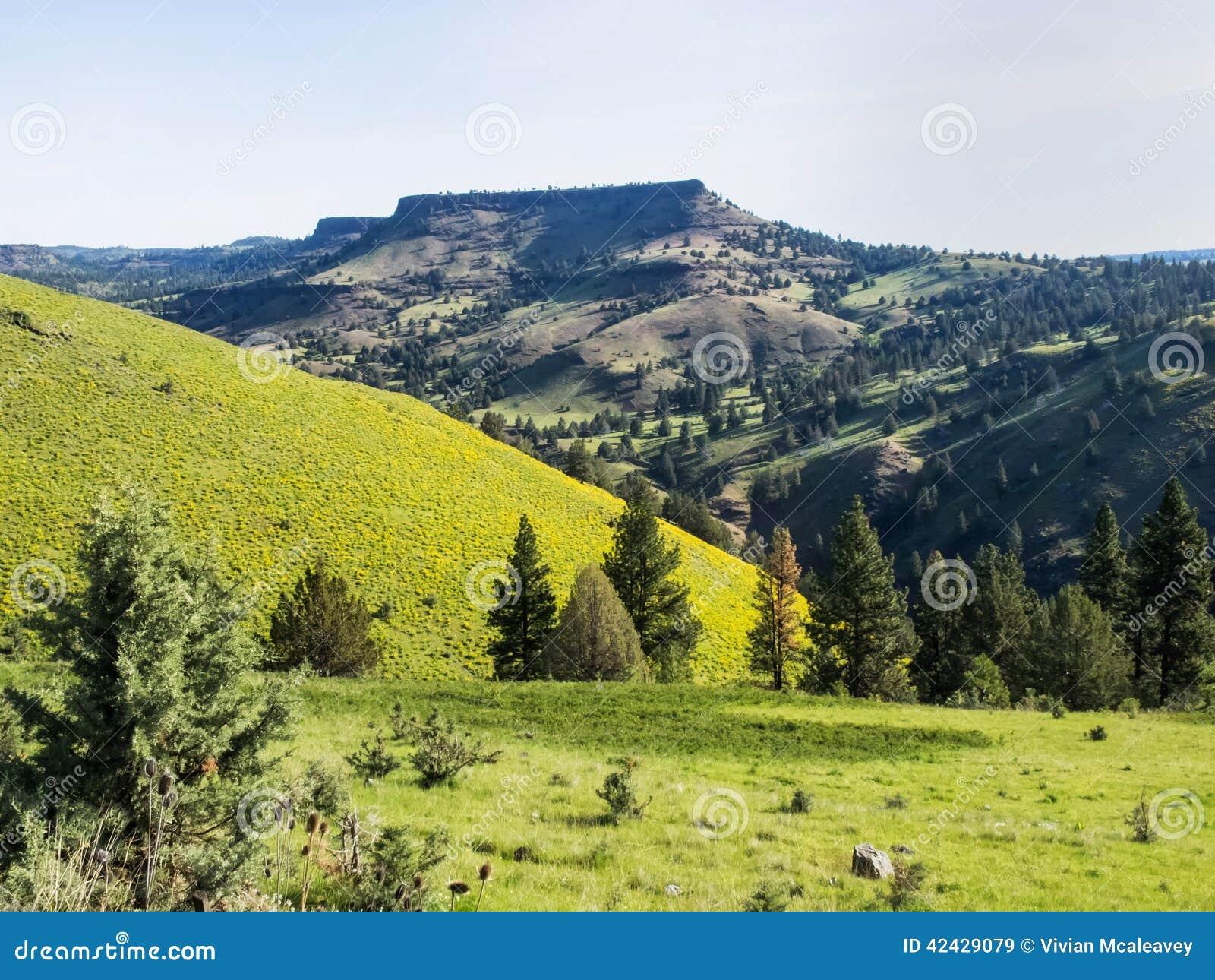 Colinas de la montaña en primavera