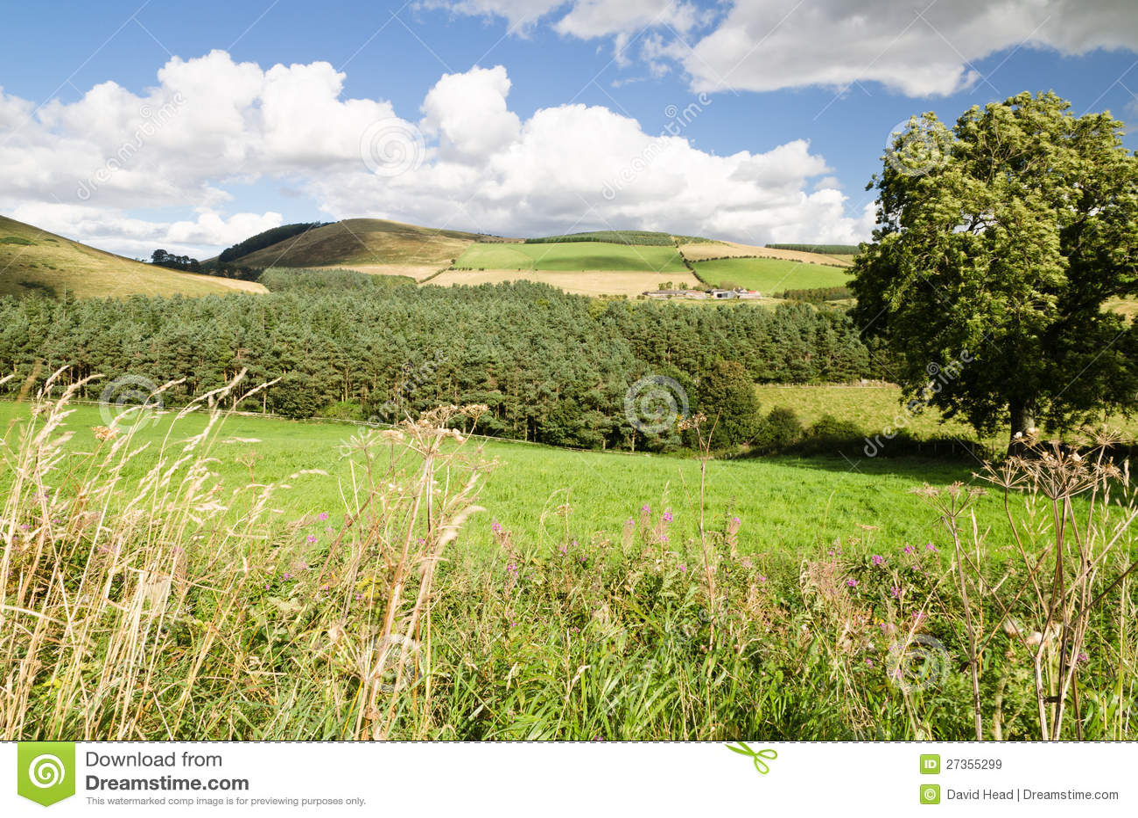 Colinas de Northumberland