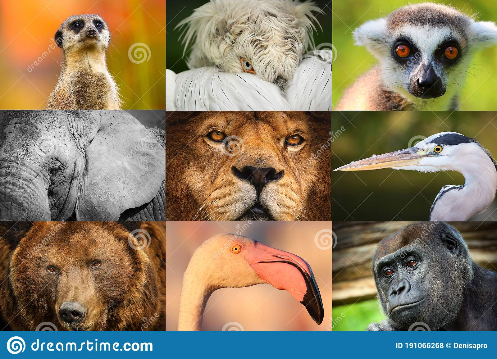 550 Animal Collage Zoo Photos Free Royalty Free Stock Photos From Dreamstime