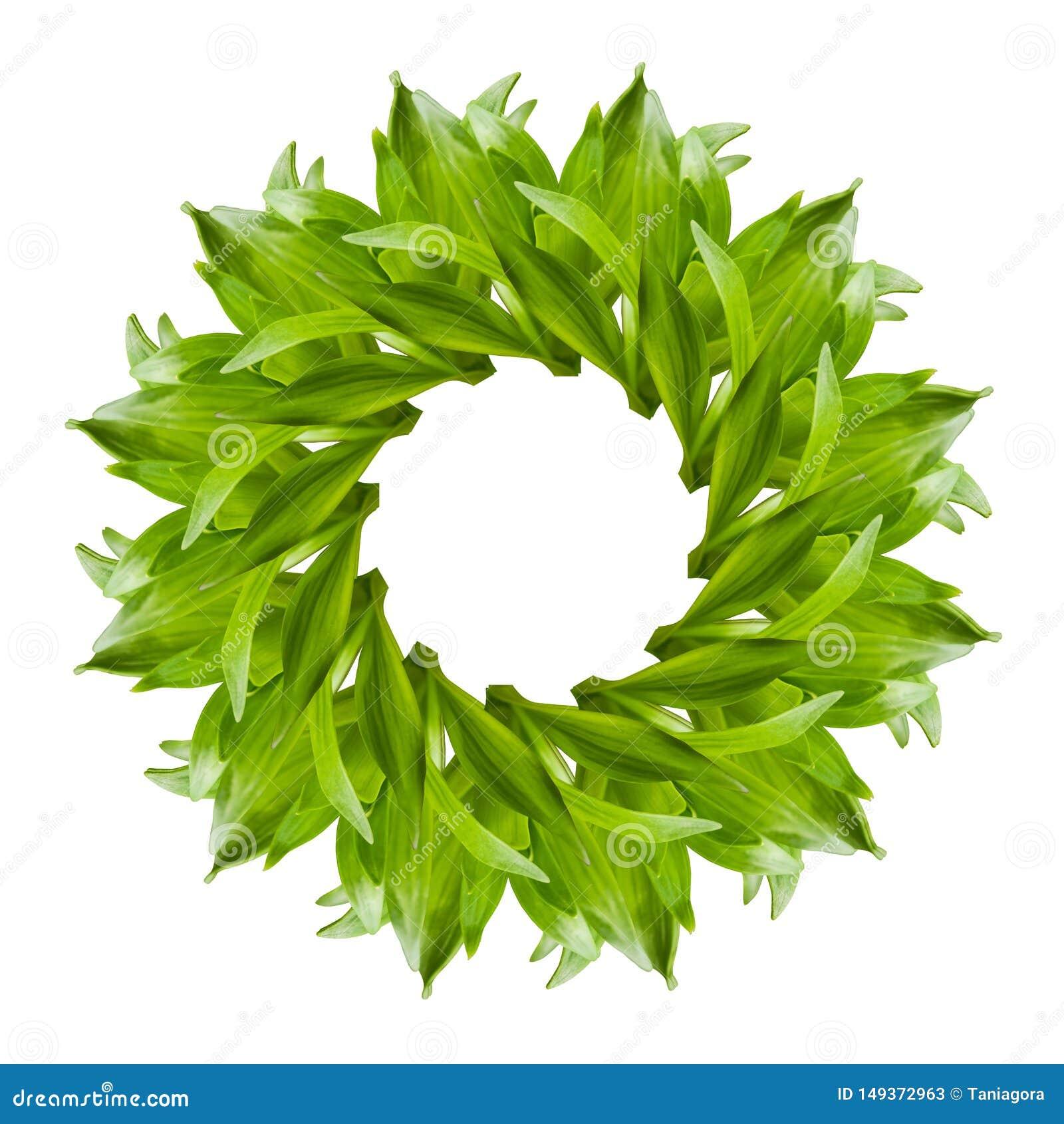 Collage av den nya gröna liljan lämnar på vit bakgrund