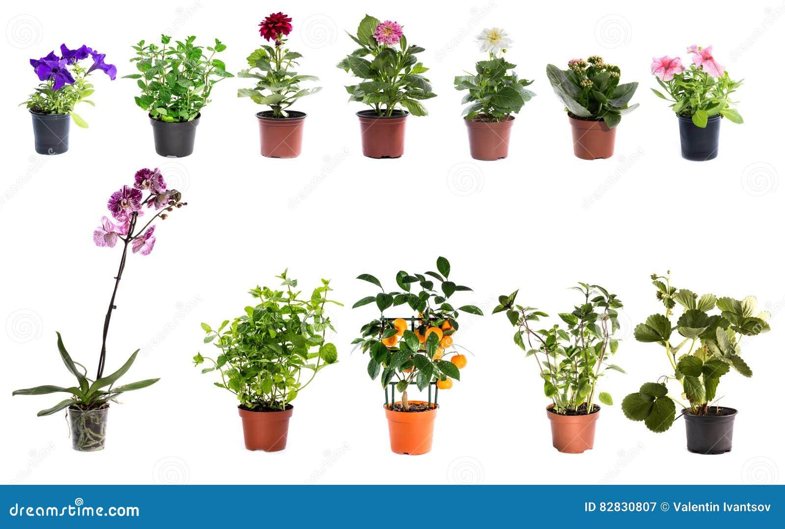 Collage av inomhus växter i krukor på en vit