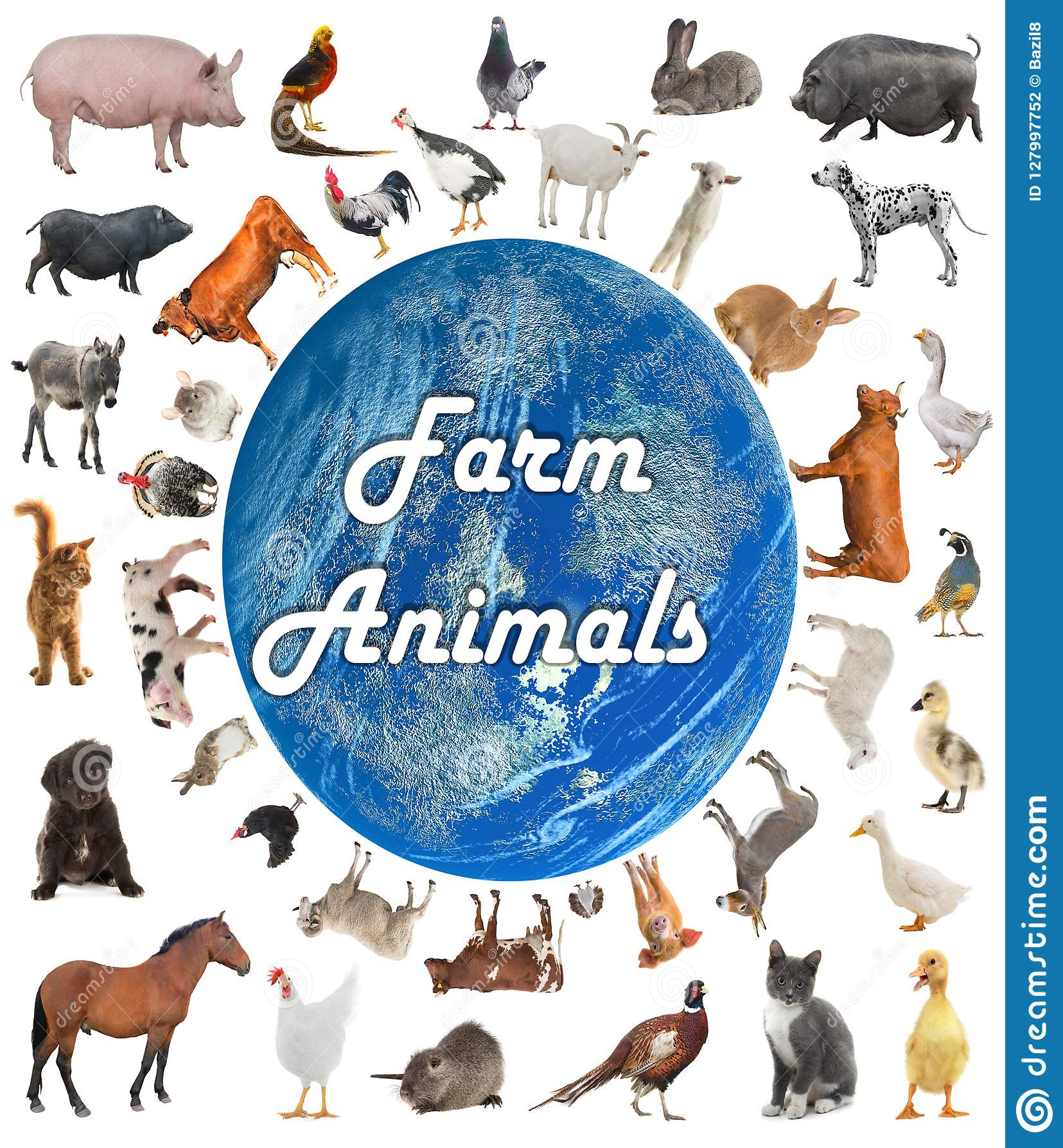 Collage av lantgårddjur